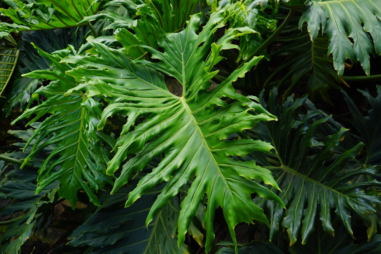 Images gratuites arbre feuille fleur vert jungle for Plante jungle