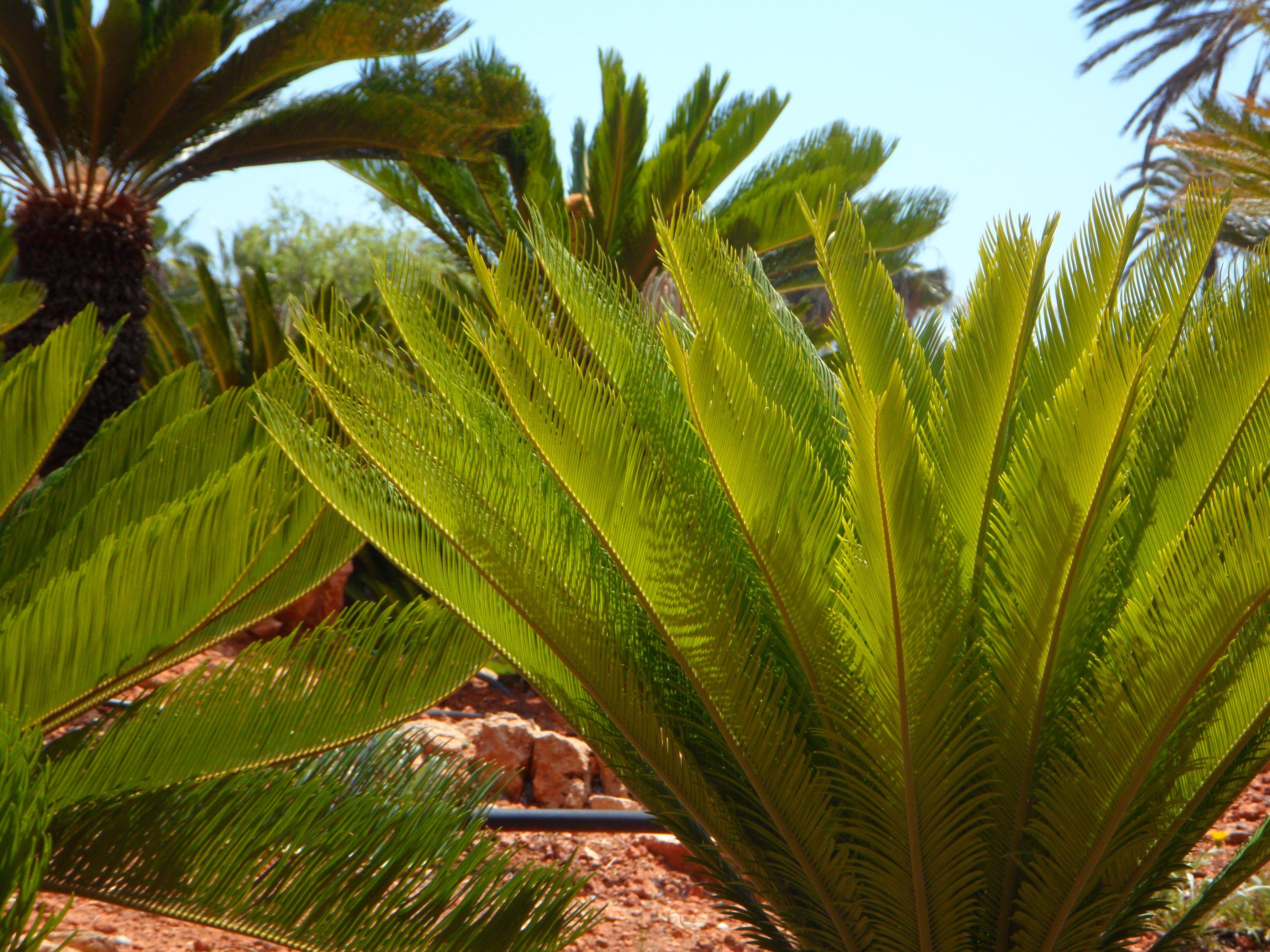 Fotos gratis rbol hoja flor verde mediterr neo for Vegetacion ornamental