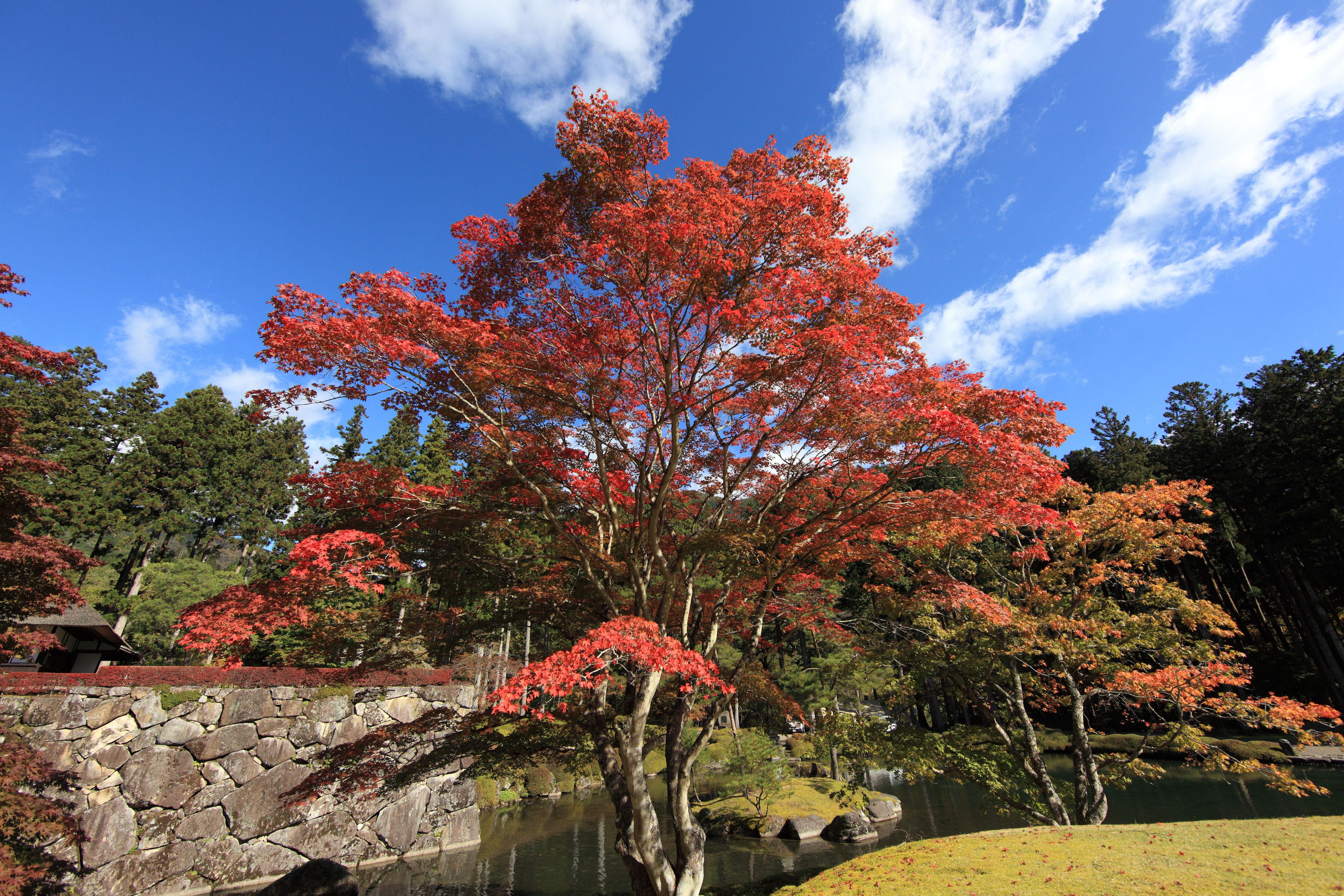 Free Images : leaf, flower, high, autumn, park, botany, garden ...