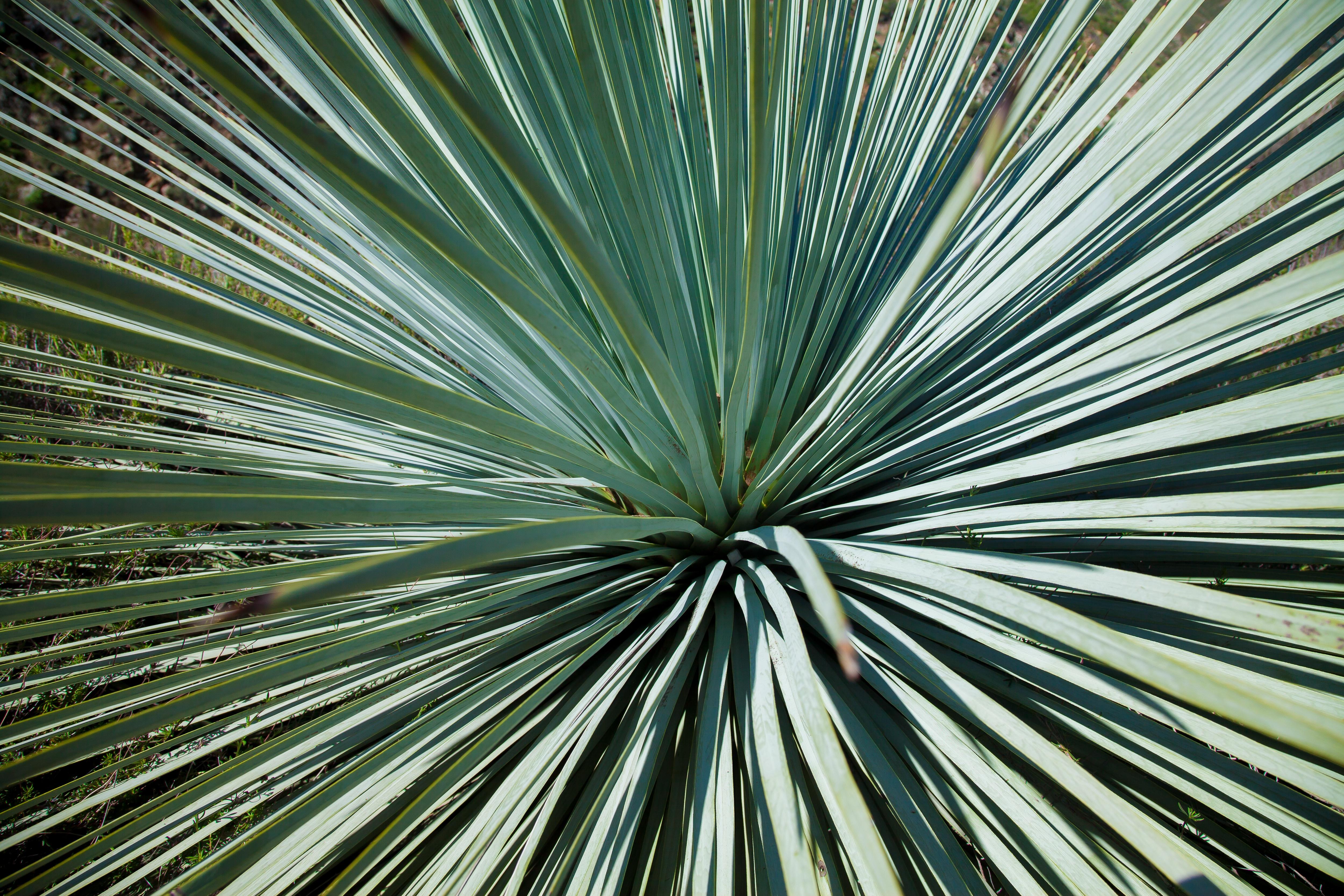 Fotos gratis : árbol, hoja, flor, línea, verde, botánica, flora, de ...