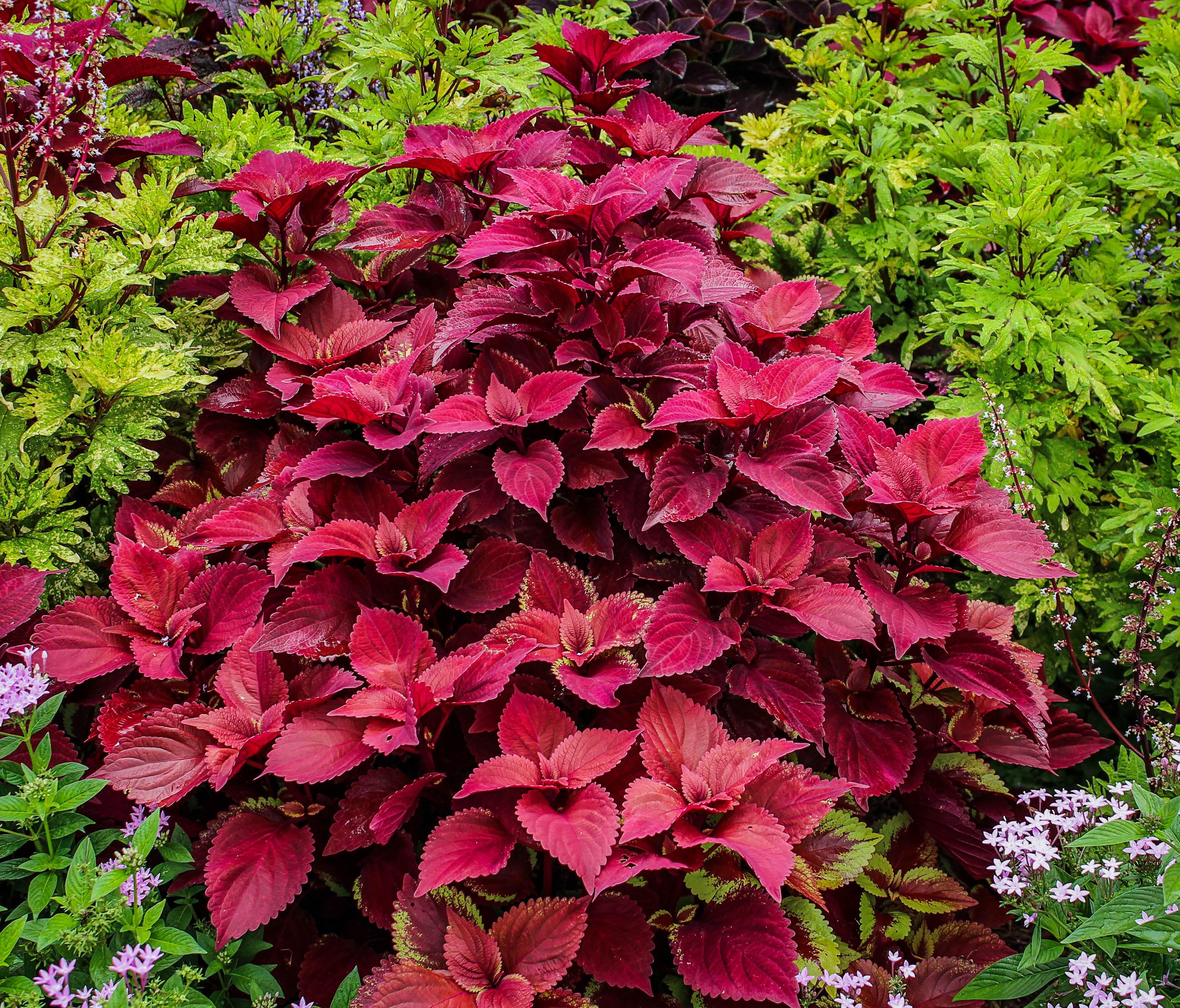 почаще бордовые растения фото с названиями в саду рейтинг лучших токоизмерительных