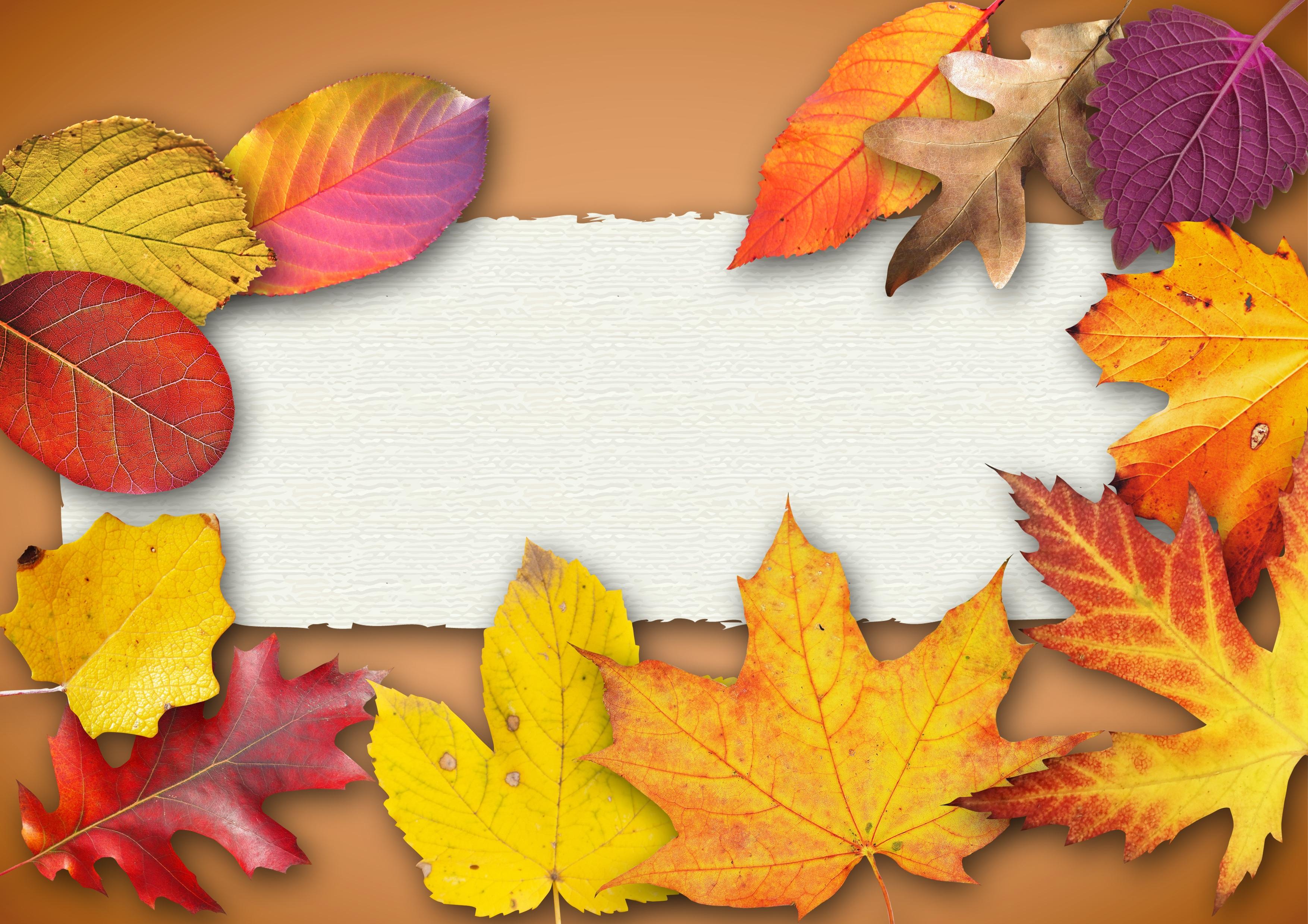 b3567306af5 Gratis billeder : træ, plante, blomst, kronblad, fest, farve, banner,  farverig, gul, sæson, kort, ahorn blad, glad, blade, festival, baggrund,  plakat, ...