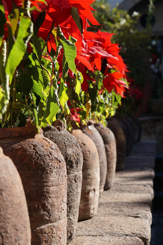 Fotos gratis : árbol, planta, hoja, flor, rojo, barro, color, otoño ...