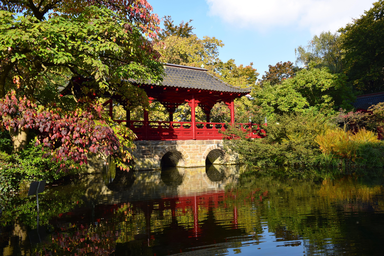 Free Images : tree, plant, leaf, flower, river, mystical, pond ...