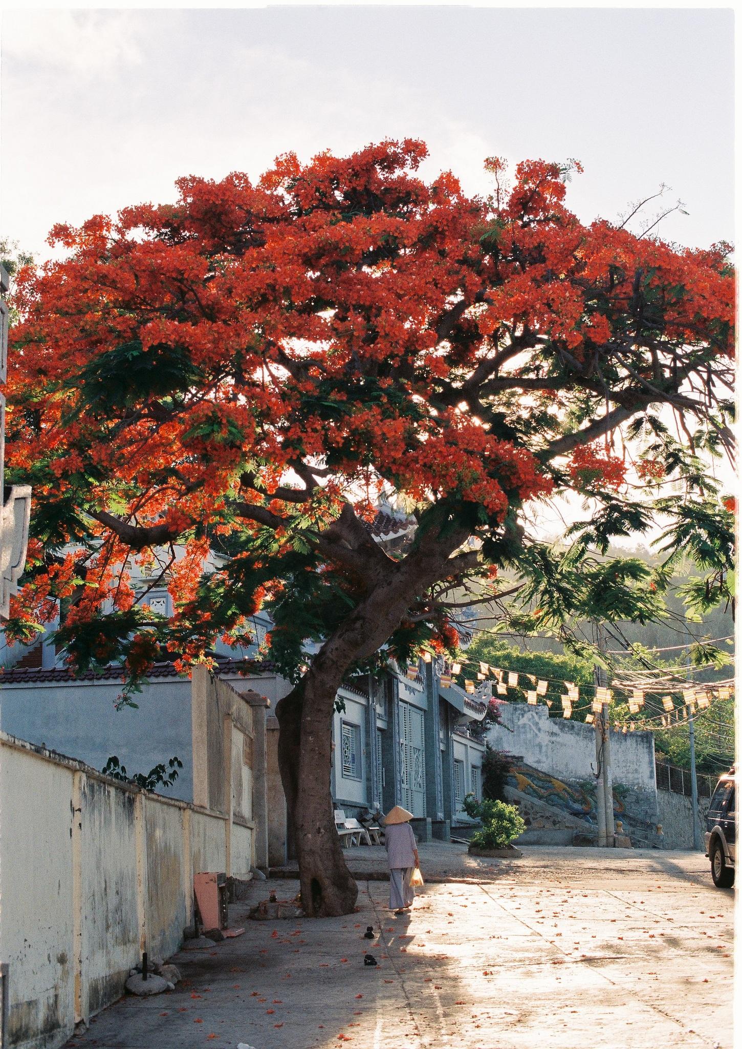 распространённый деревья во вьетнаме названия и фото экскурсовода гида новая
