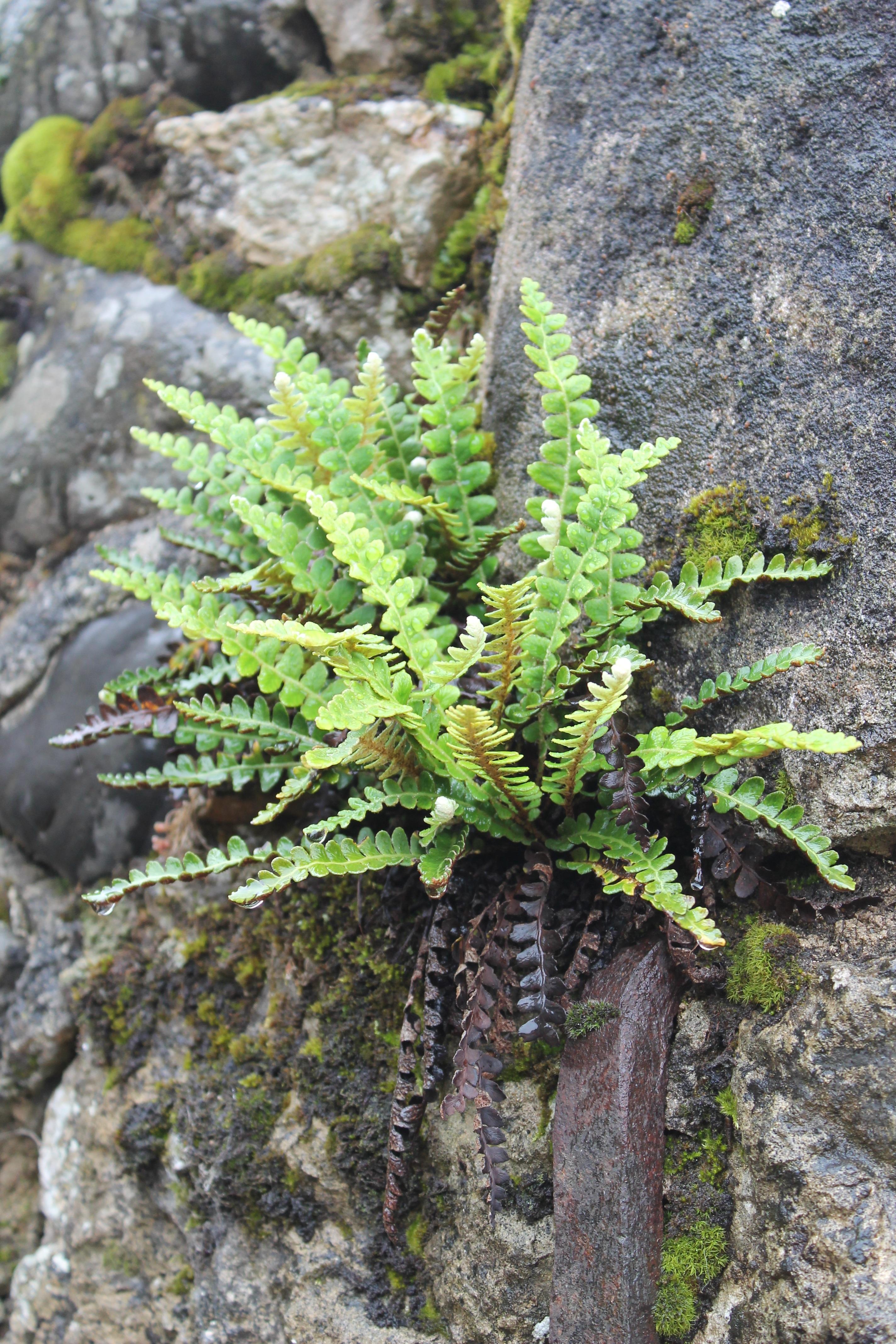 Images gratuites arbre feuille fleur tronc mousse for Plante ligneuse