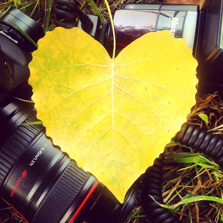 Free Images Tree Photography Sunlight Leaf Flower Foliage