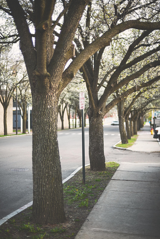 плитки картинки деревьев на улицах промышленного