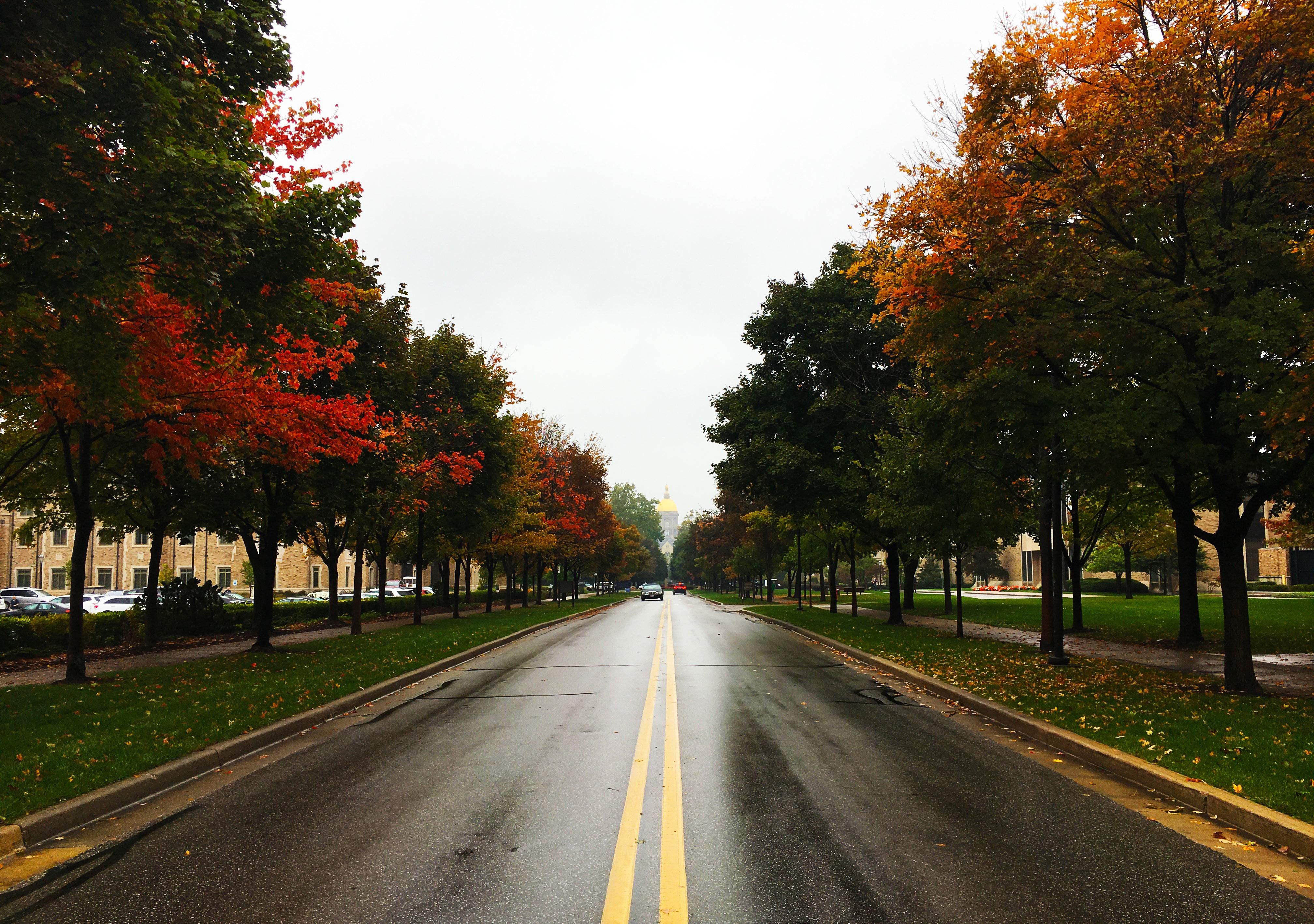 дорога картинки деревьев на улицах изменения составе оборудования