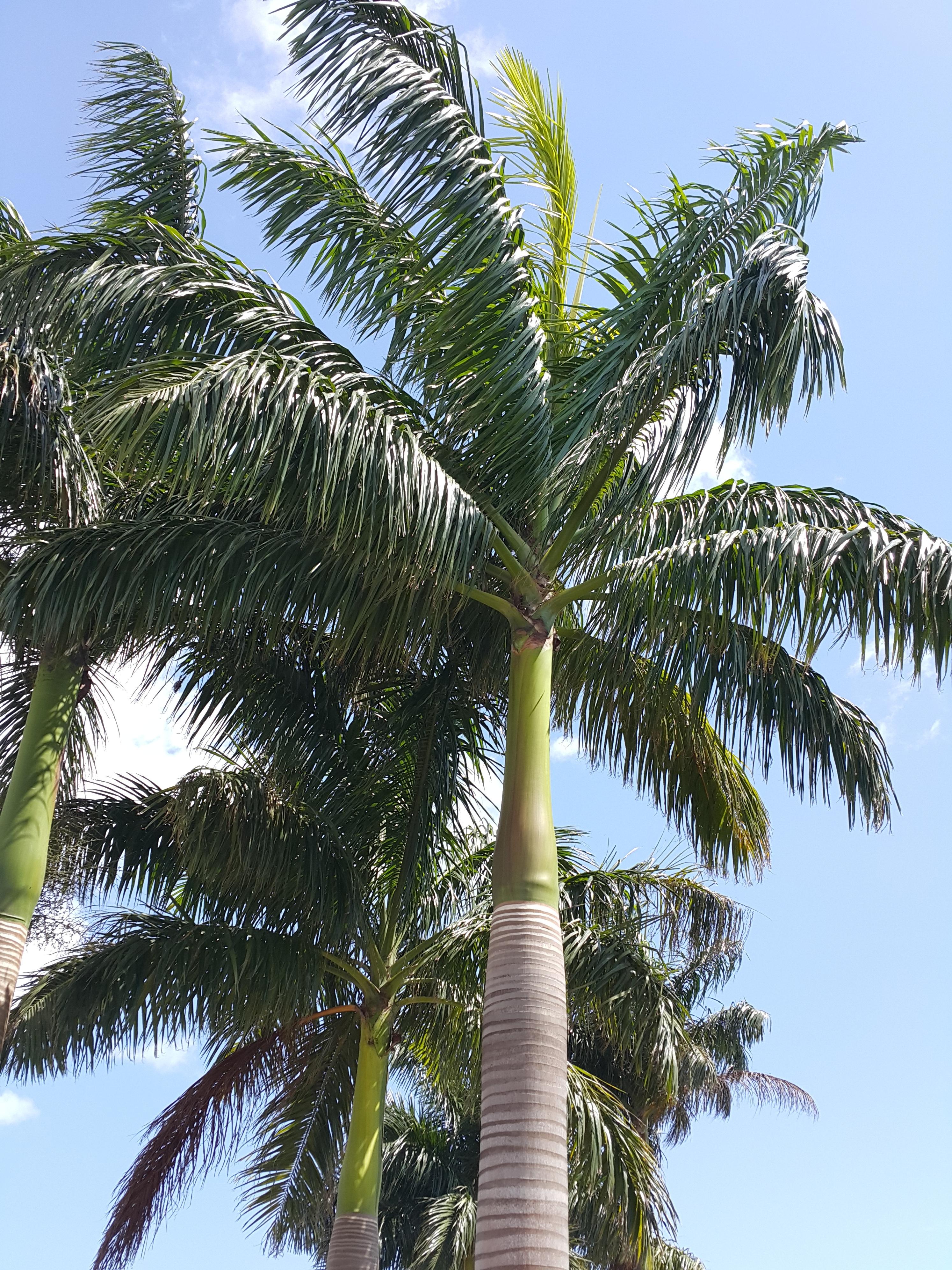 Images Gratuites Arbre Ciel Fleur Produire Tropical Botanique