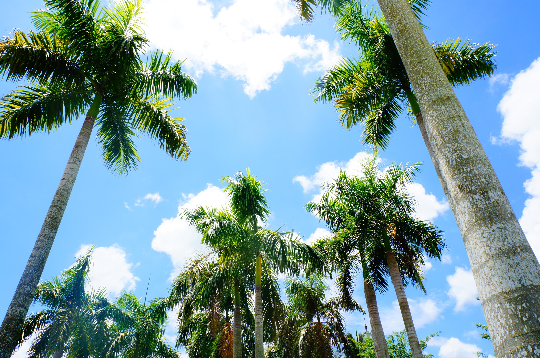 живую пальмы и лианы картинки двигаются вдоль