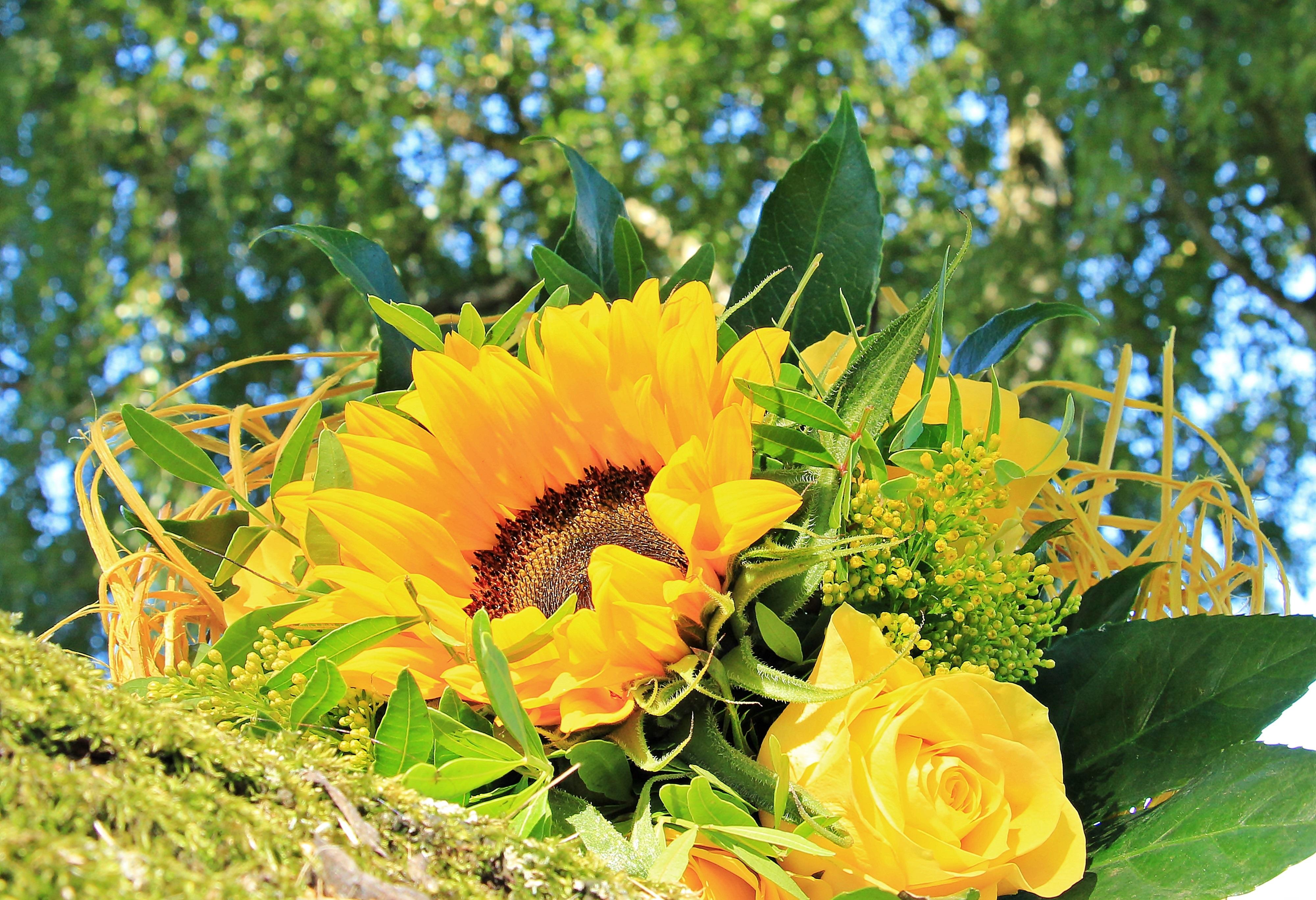 Букет полевых цветов картинки гифки