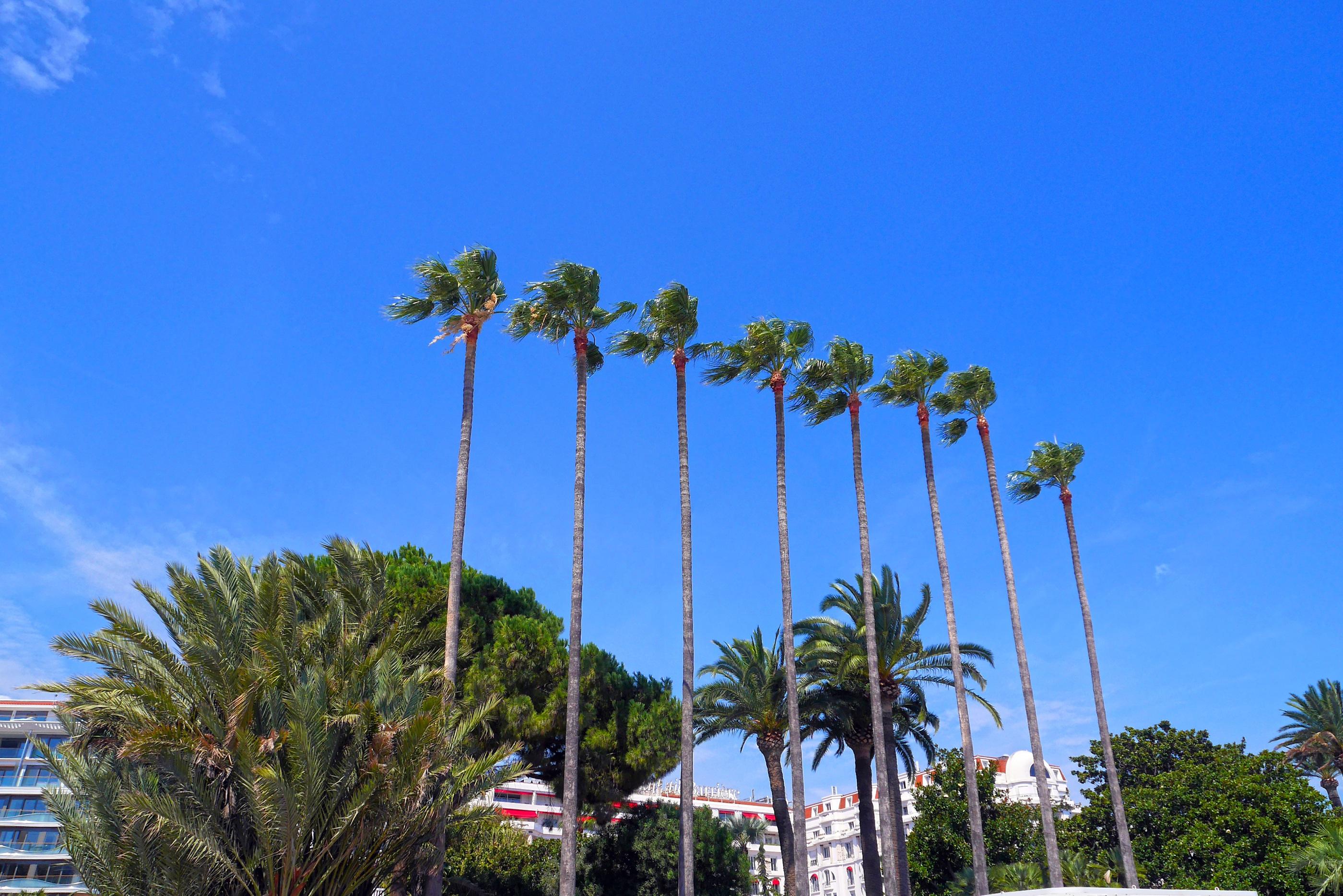 arbre plante ciel ensoleillement palmier fleur vent parc botanique flore cosystme plante fleurs cannes plante - Arbre Ciel