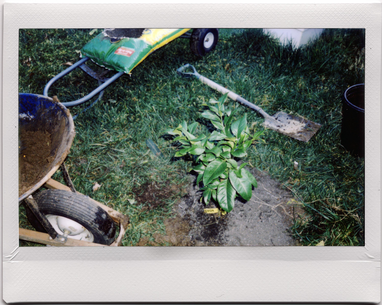 Cây Thực Vật Đất Chanh Arbre Instax Tức Thời Citron Funjifilm