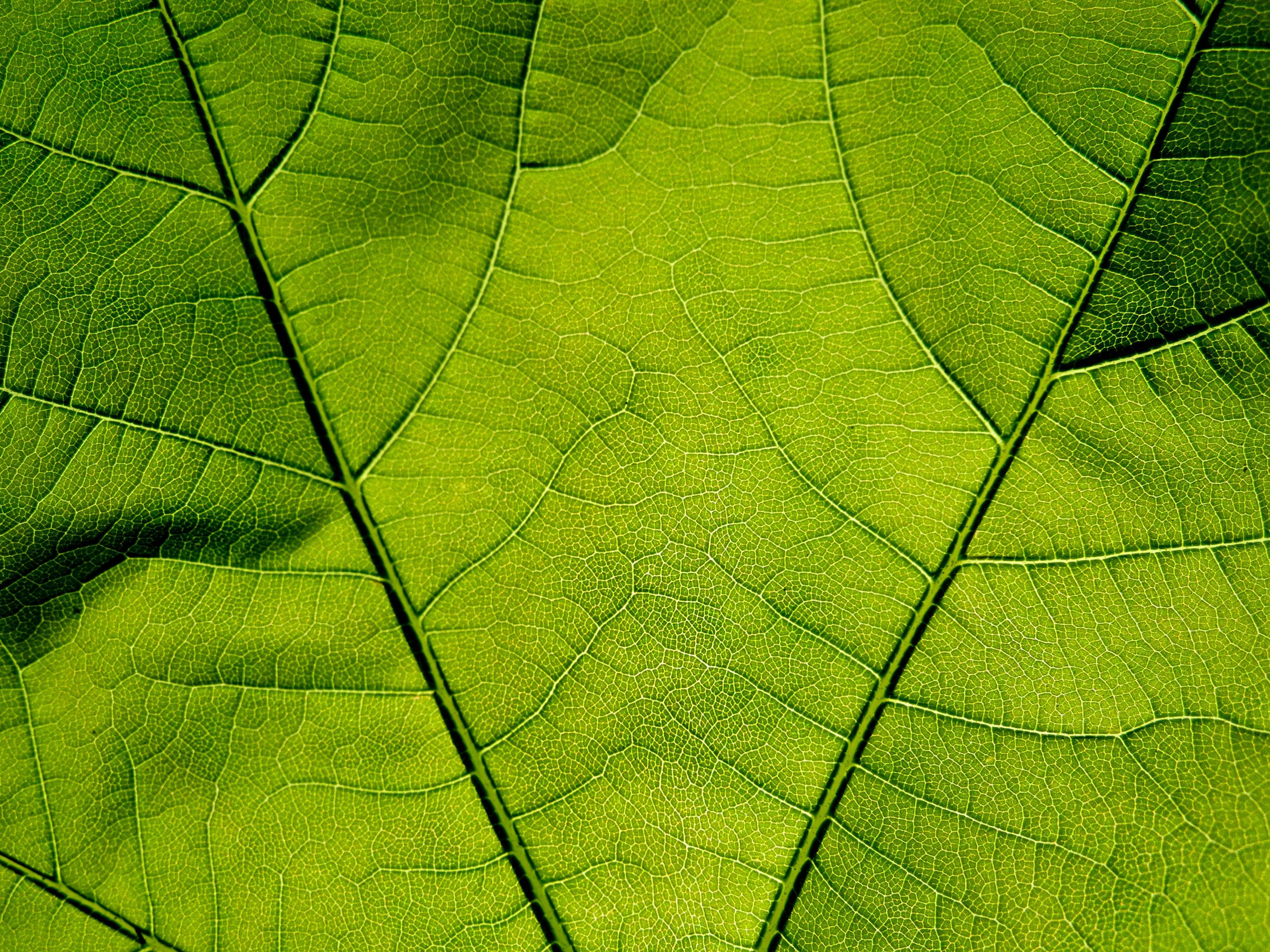 Fotos gratis : árbol, luz de sol, textura, hoja, línea, verde, macro ...