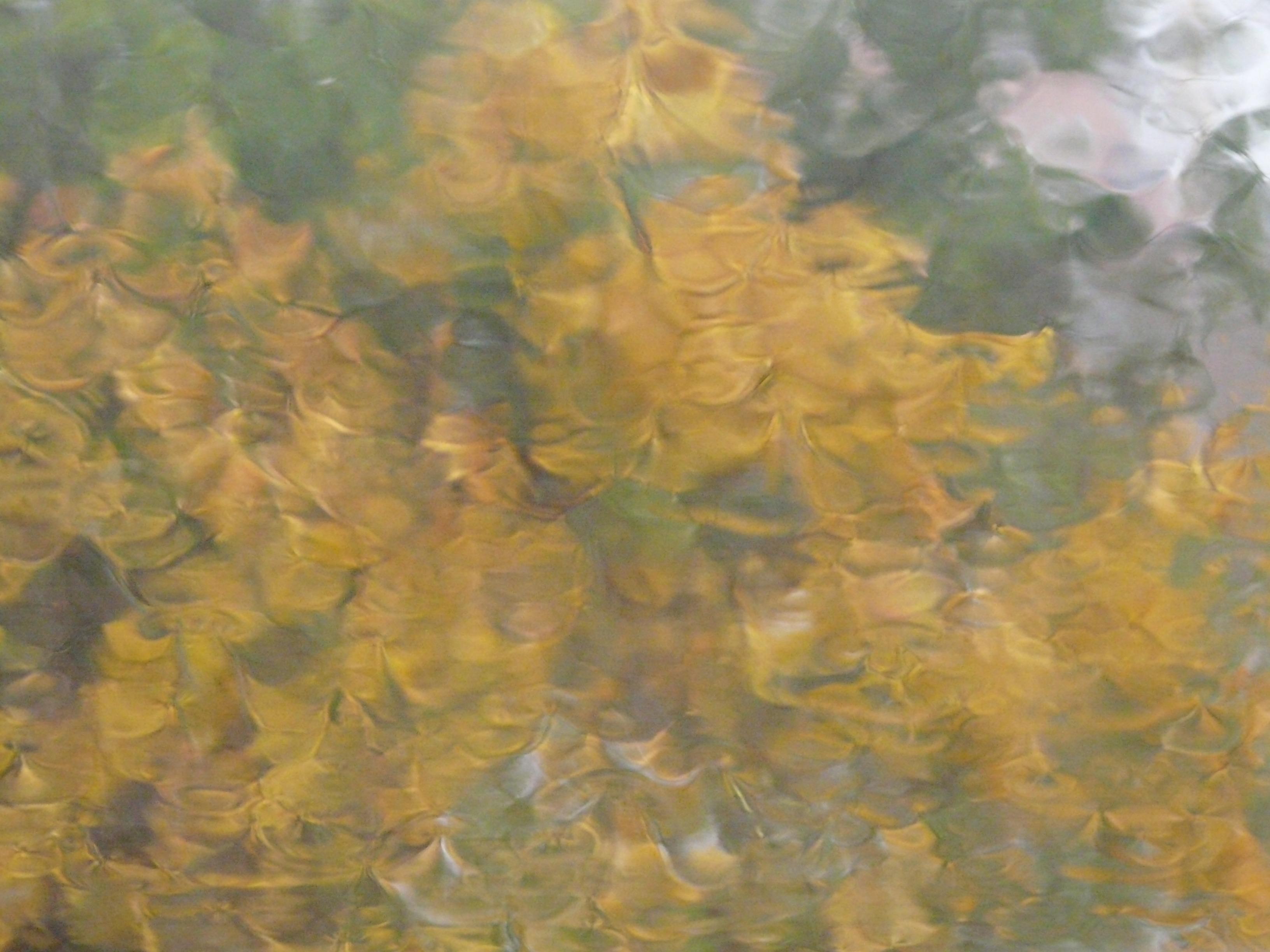 Fotoğraf Ağaç Güneş ışığı Doku Yağmur Yaprak çiçek Pencere