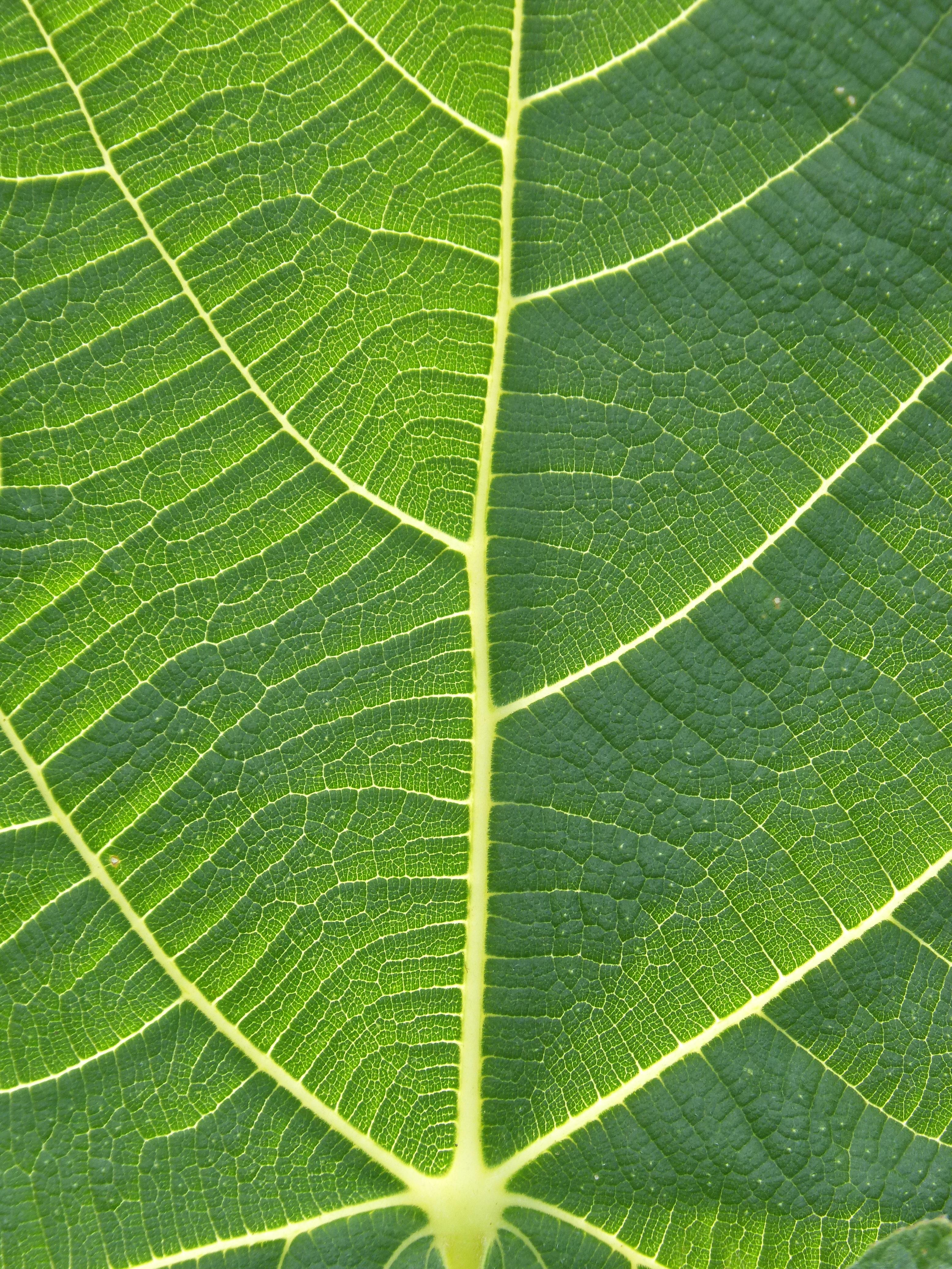 Fotos gratis : textura, hoja, flor, verde, Produce, botánica, flora ...