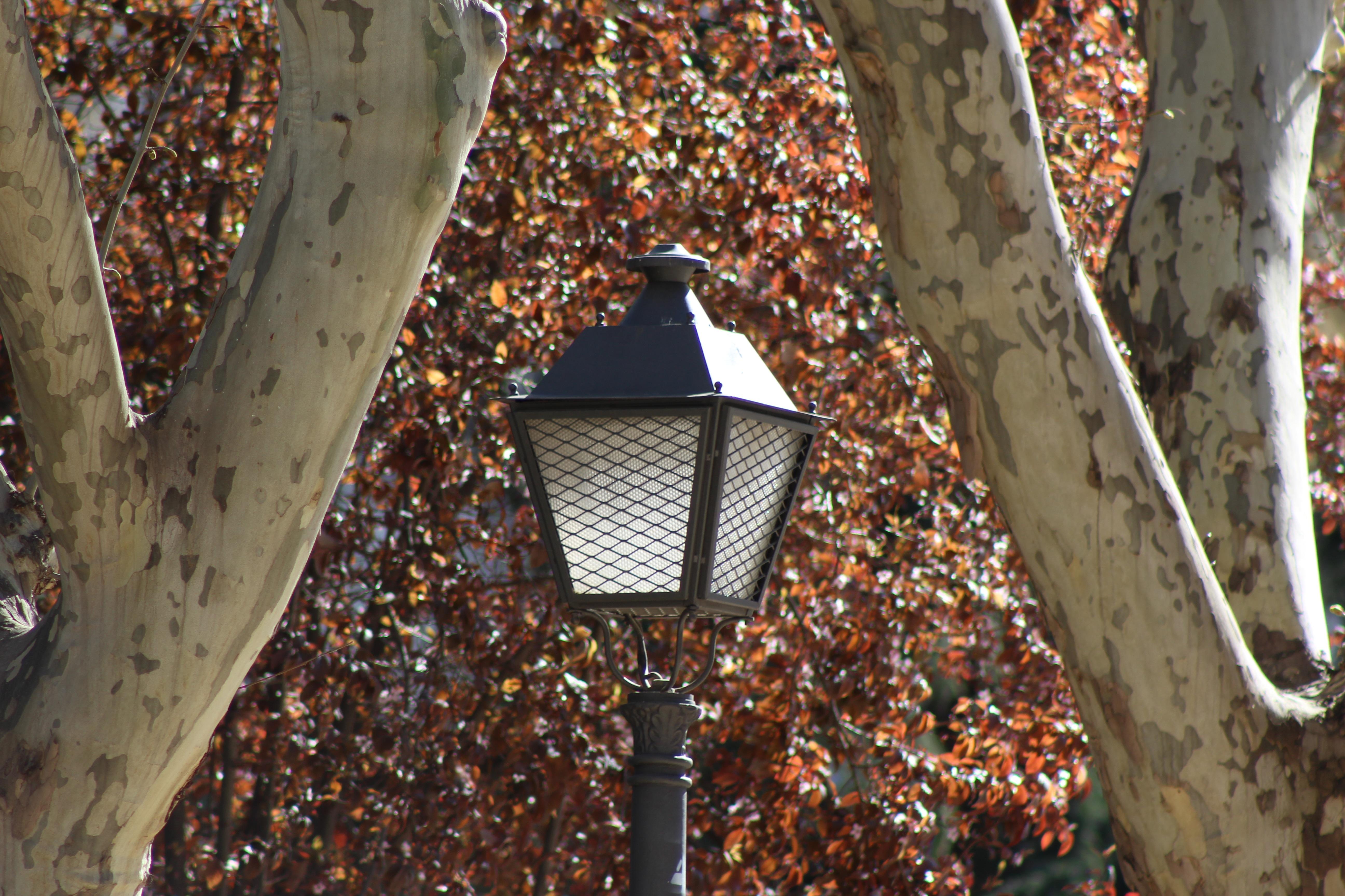 дерево фонарь картинки представляет
