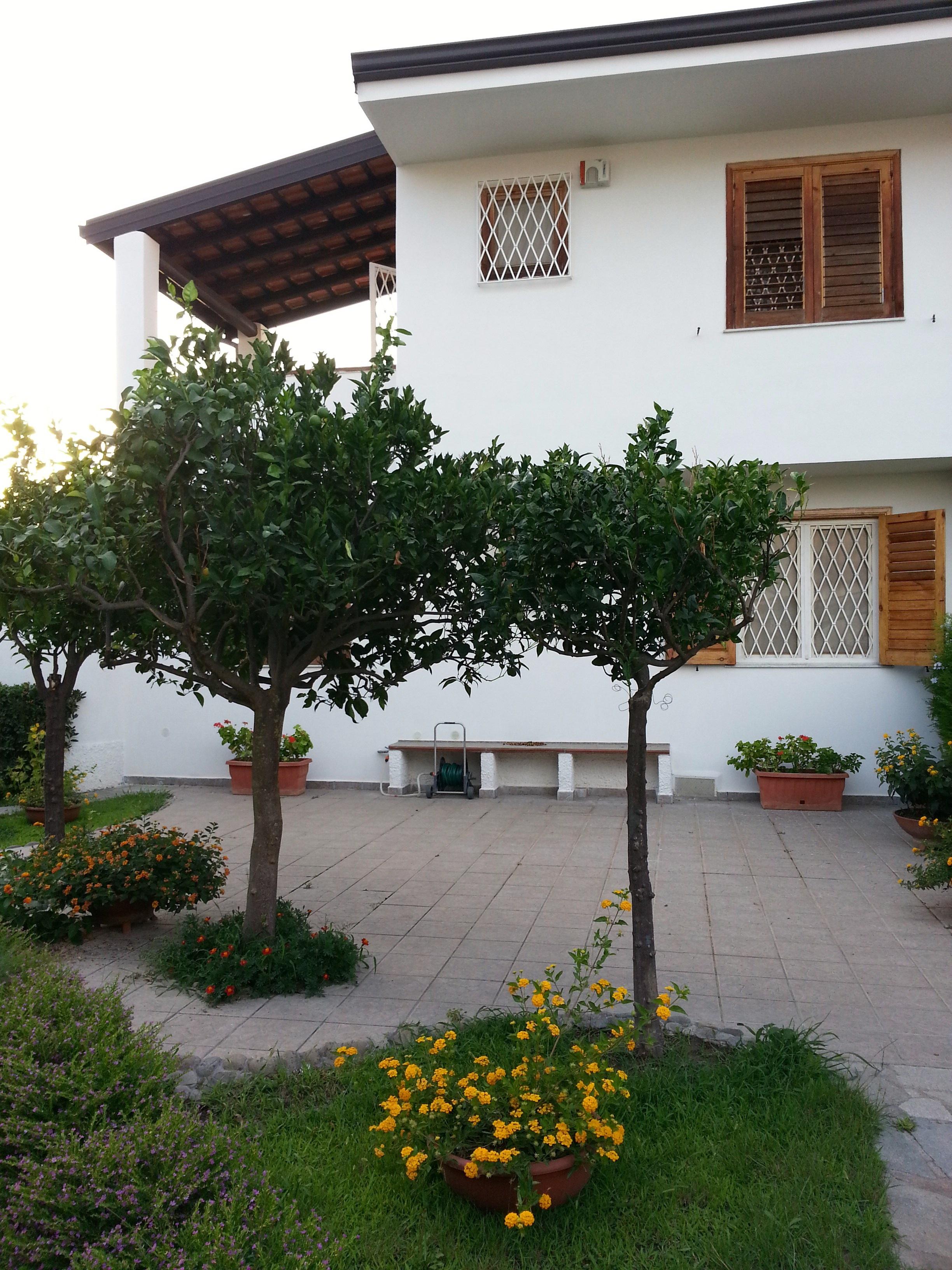 Ilmaisia kuvia puu kasvi huvila talo kukka koti for Plant de villa