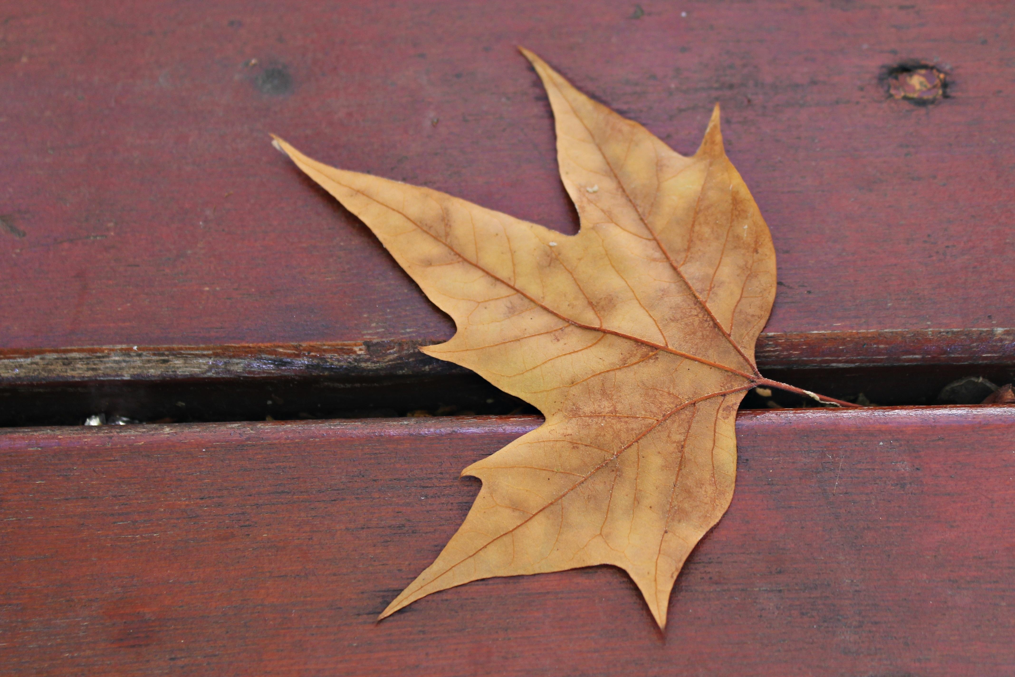Fotos gratis : árbol, planta, madera, flor, otoño, parque, bodegón ...