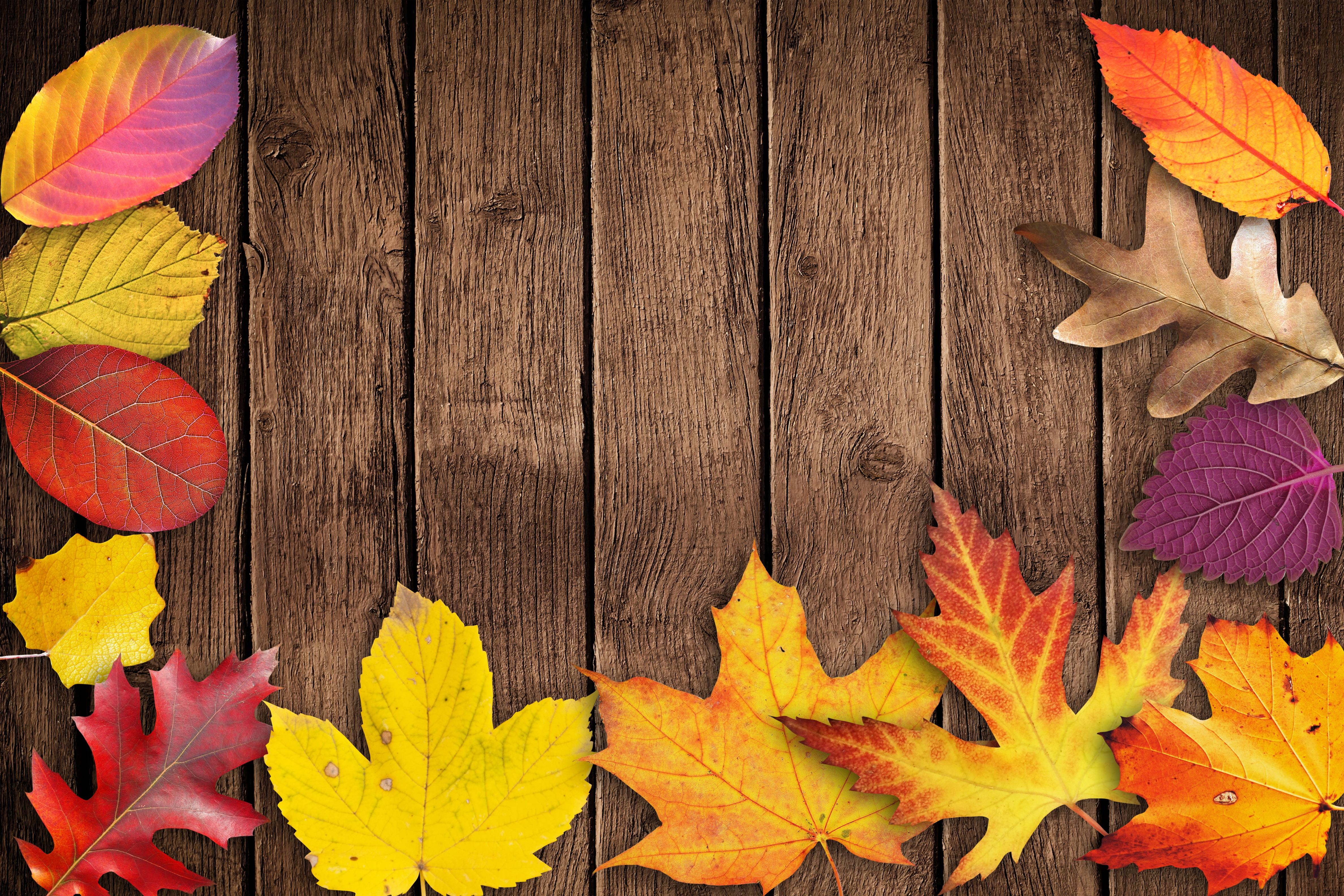 230d1952052 Gratis billeder : træ, plante, blomst, kronblad, fest, farve, banner,  farverig, gul, flora, sæson, kort, ahorn blad, glad, blade, kunst,  festival, baggrund, ...