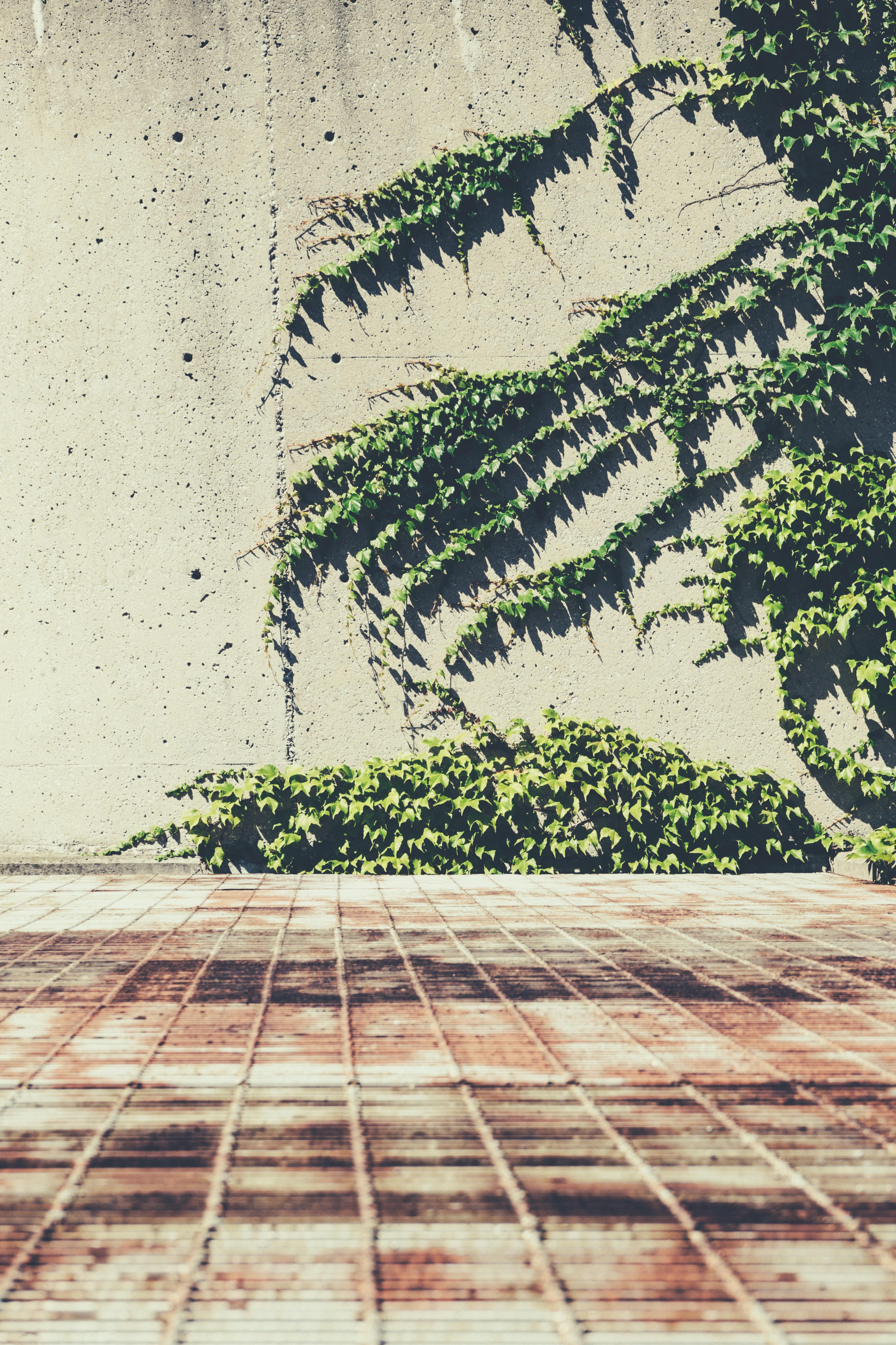 Images Gratuites : arbre, plante, bois, feuille, mur, vert, sol