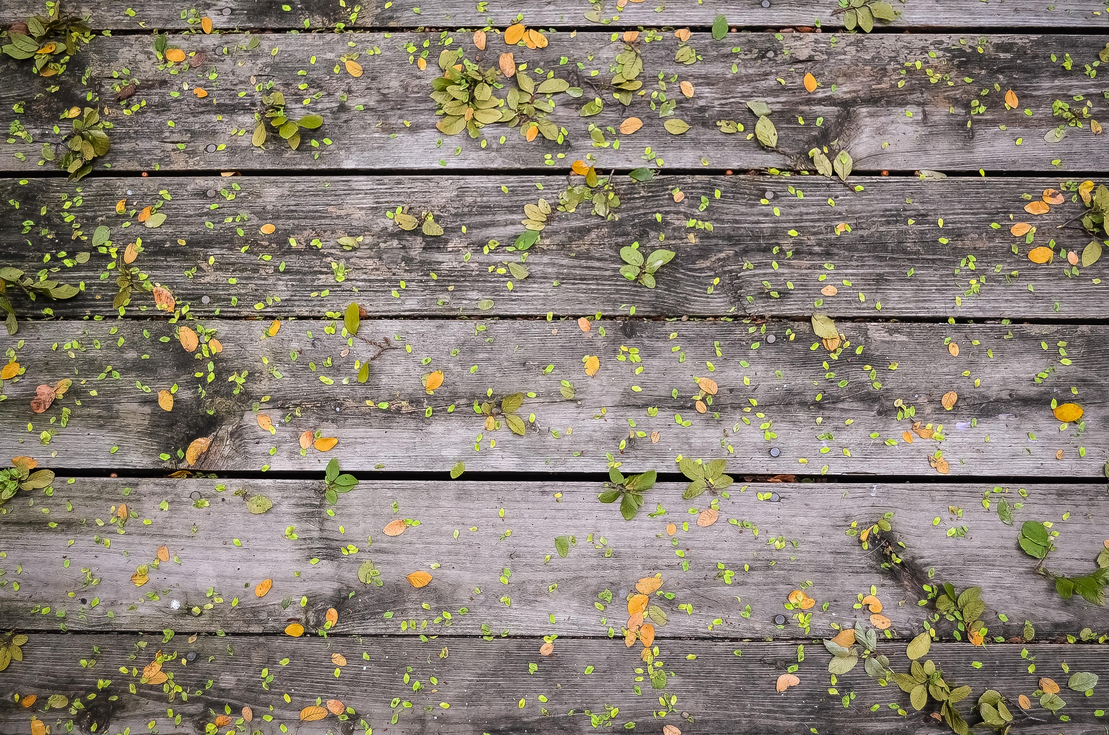 Fotos gratis rbol planta textura hoja flor pared for Leroy merlin tappezzeria