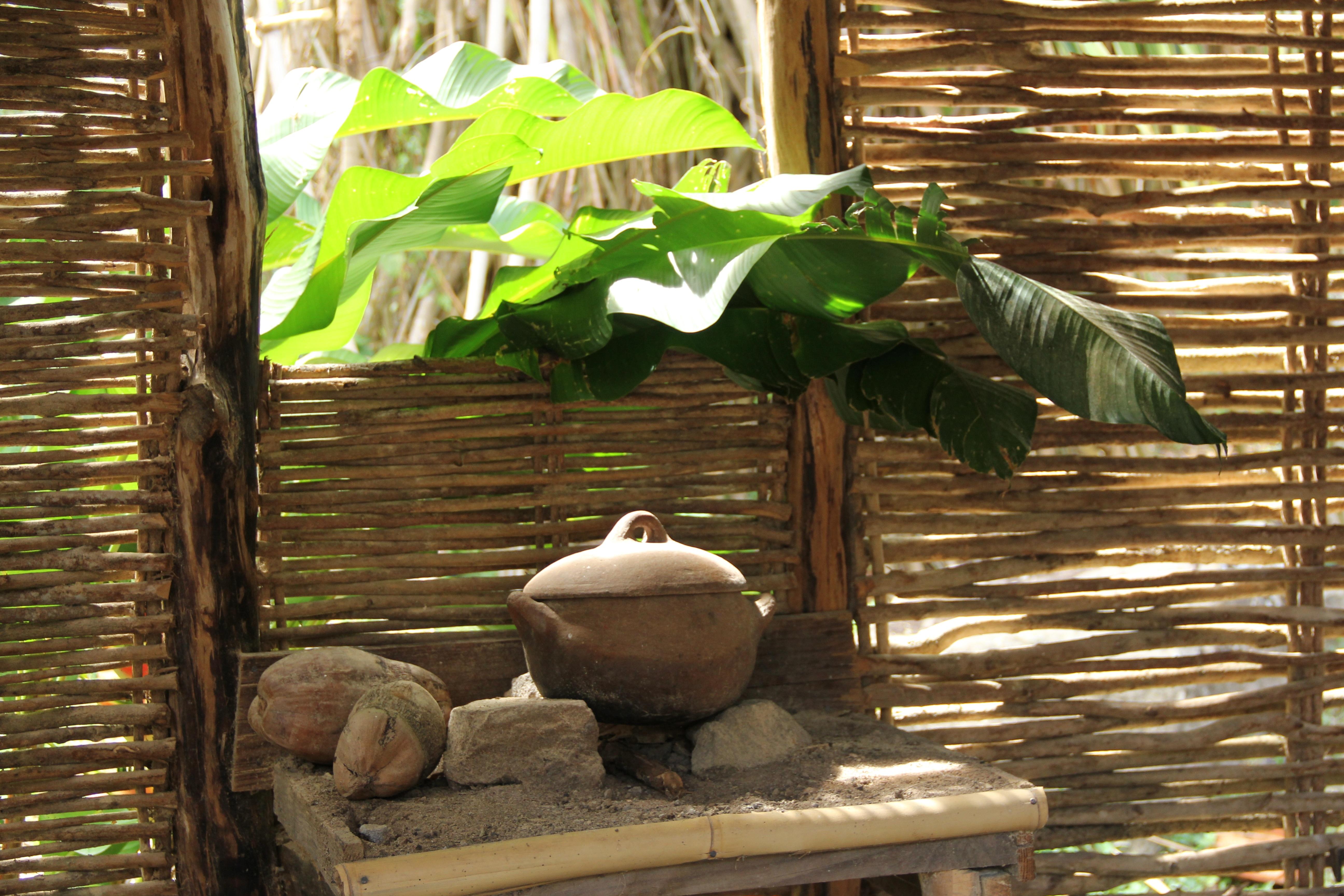 Kostenlose Foto Baum Pflanze Holz Zoo Grün Dschungel Kochen