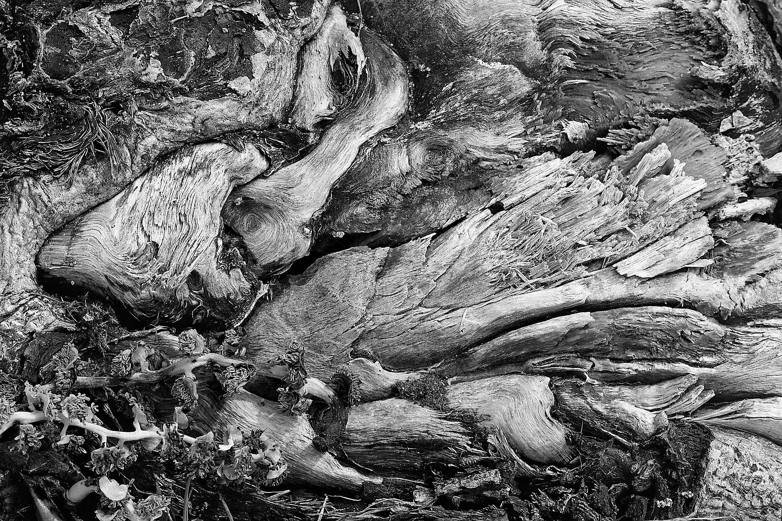 Fotos Gratis : árbol, Rock, Abstracto, En Blanco Y Negro