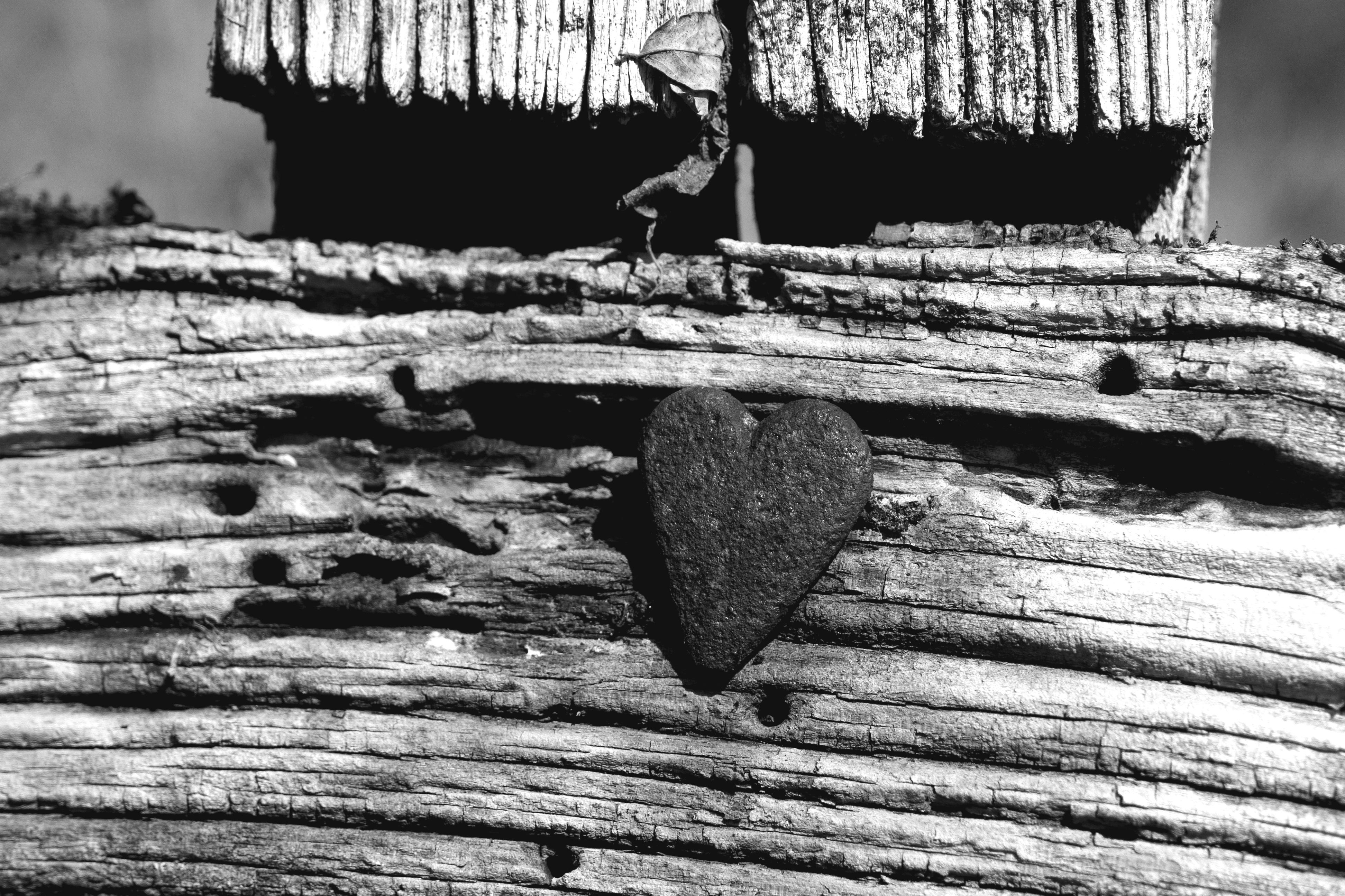 Images Gratuites Arbre Roche Noir Et Blanc Bois La