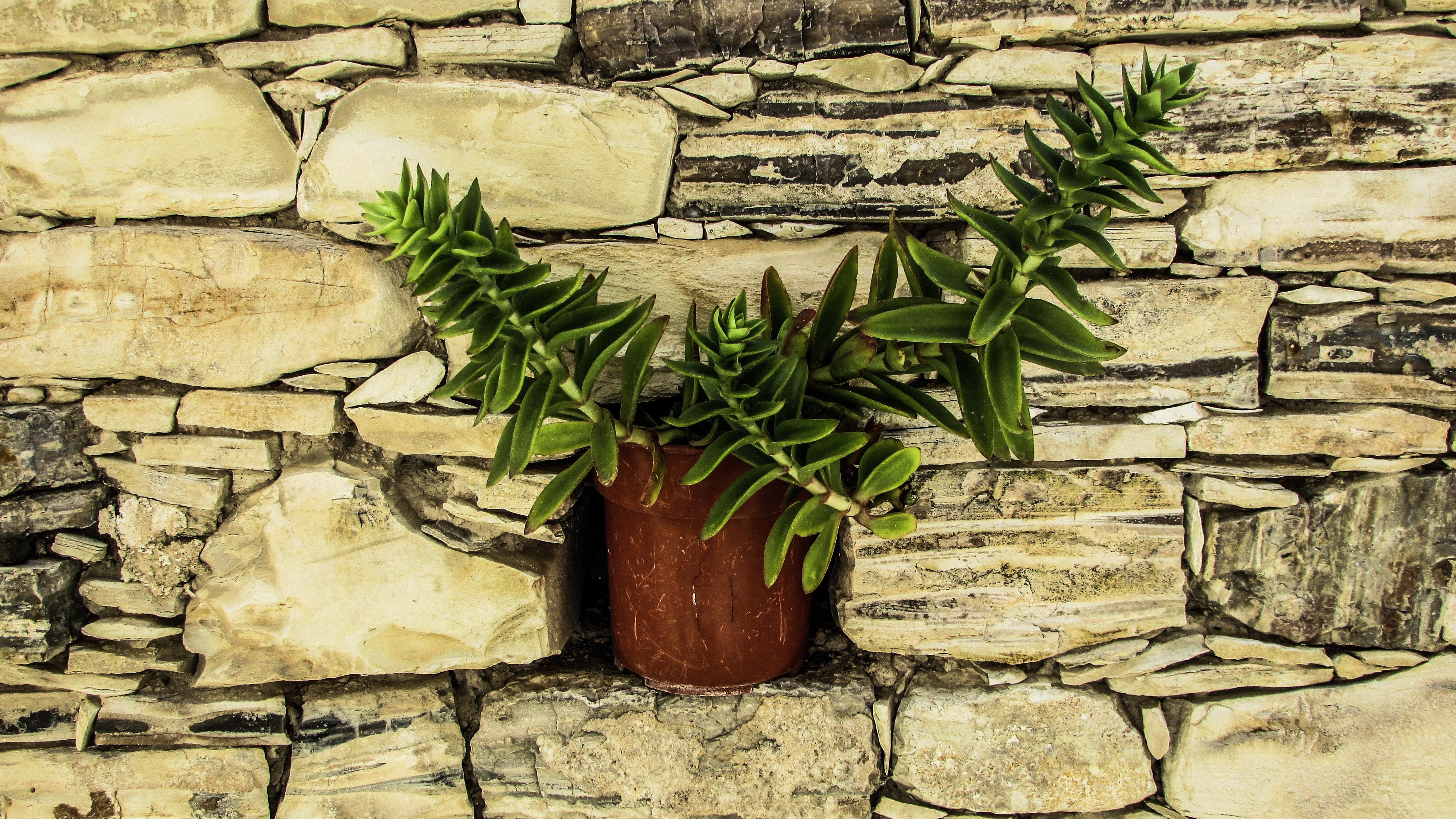 Free Images : tree, rock, branch, plant, wood, village, decoration ...