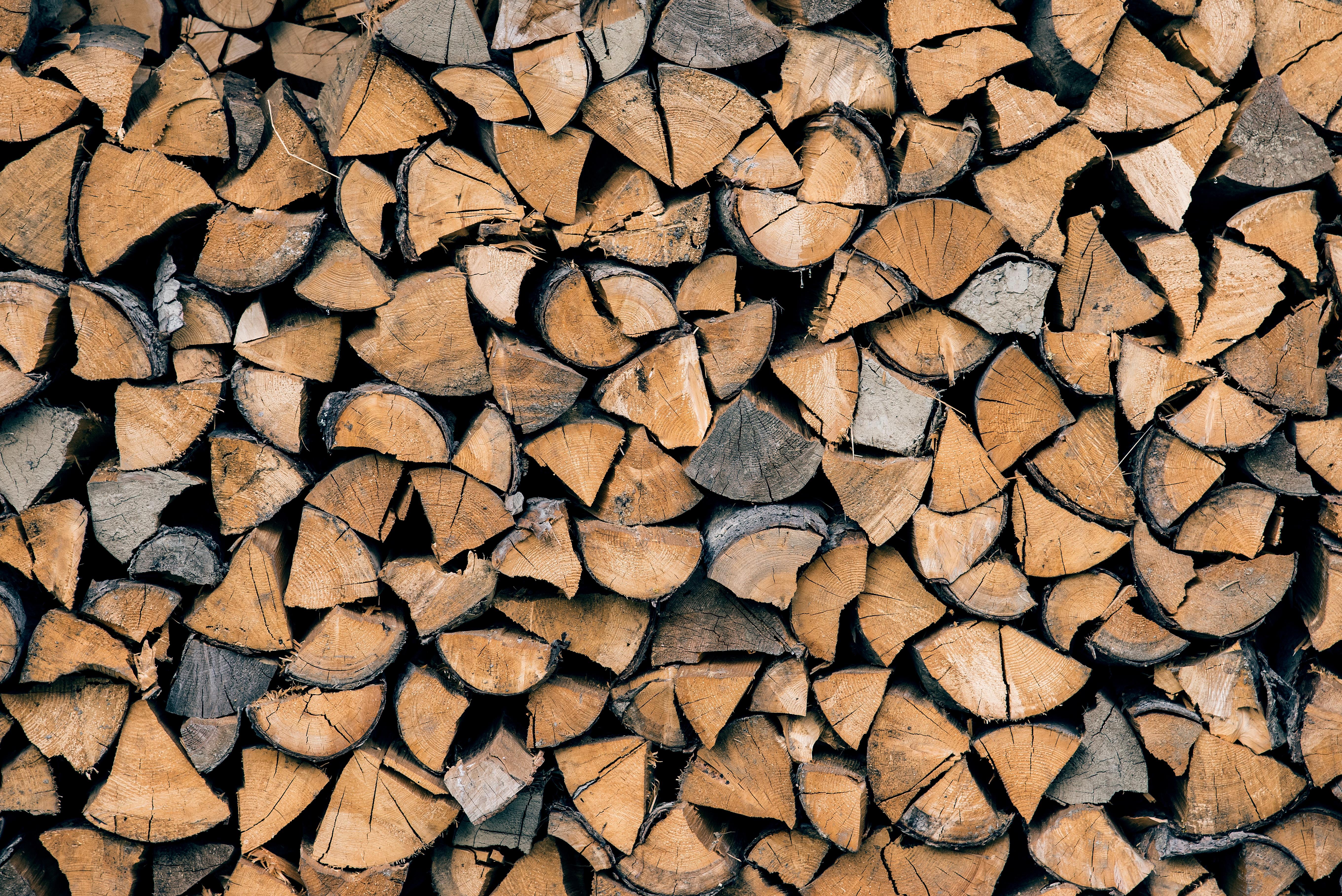 Free Images : tree, rock, branch, texture, leaf, floor