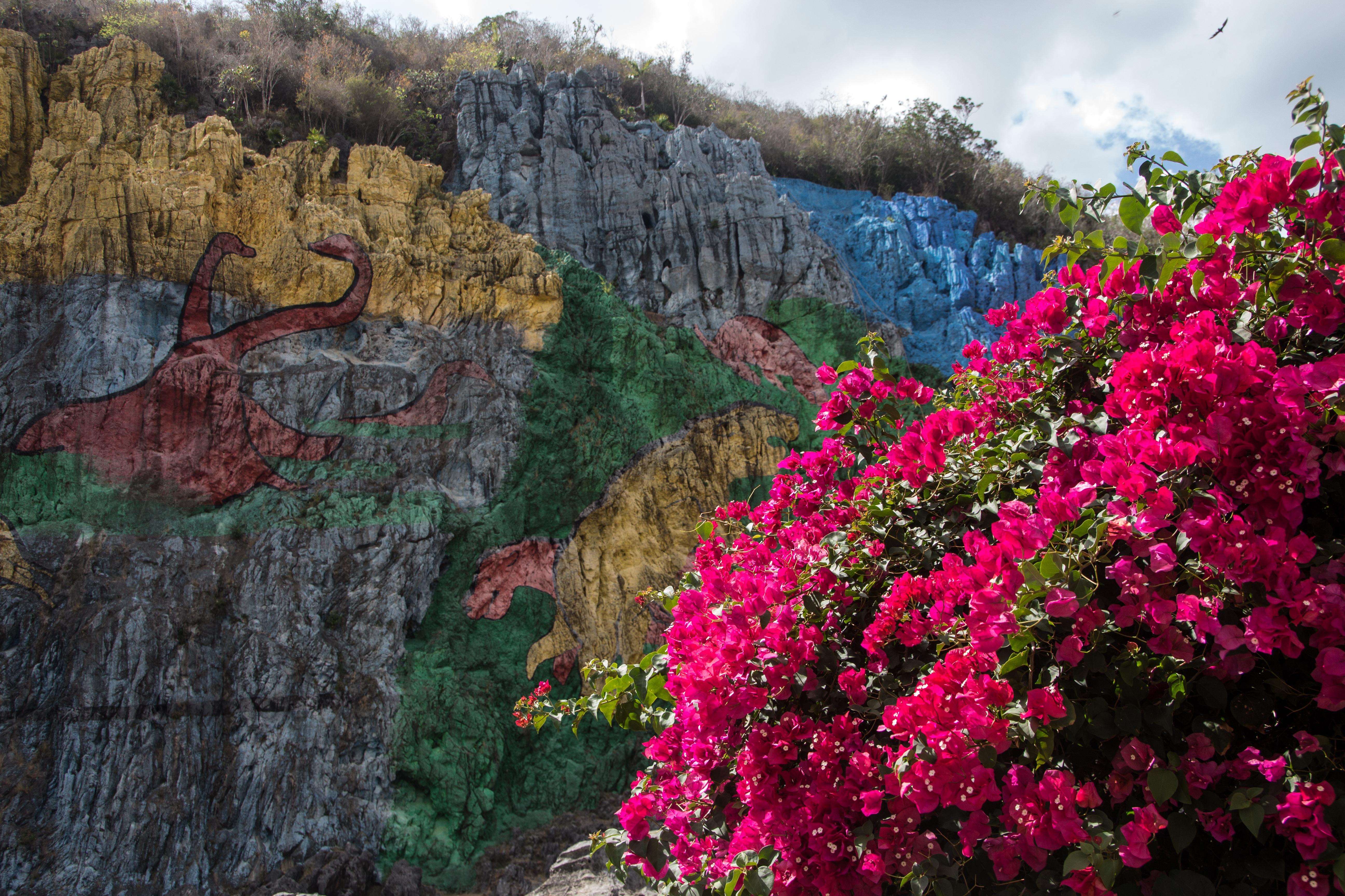 Fotograf Agac Yaprak Cicek Sonbahar Park Bitki Ortusu