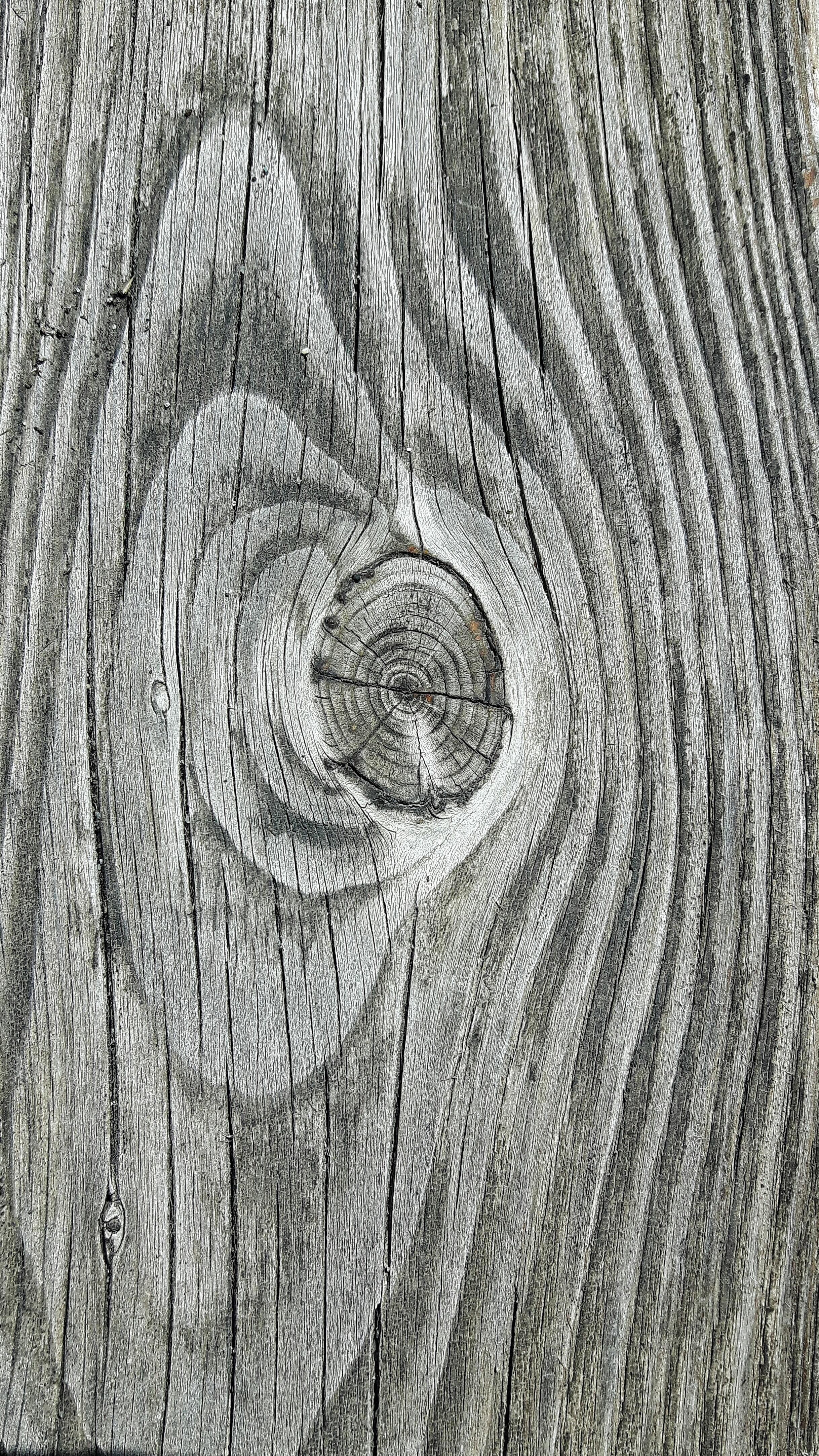 Images Gratuites : arbre, Roche, plante, bois, texture, feuille, tronc, vieux, sol, porte ...
