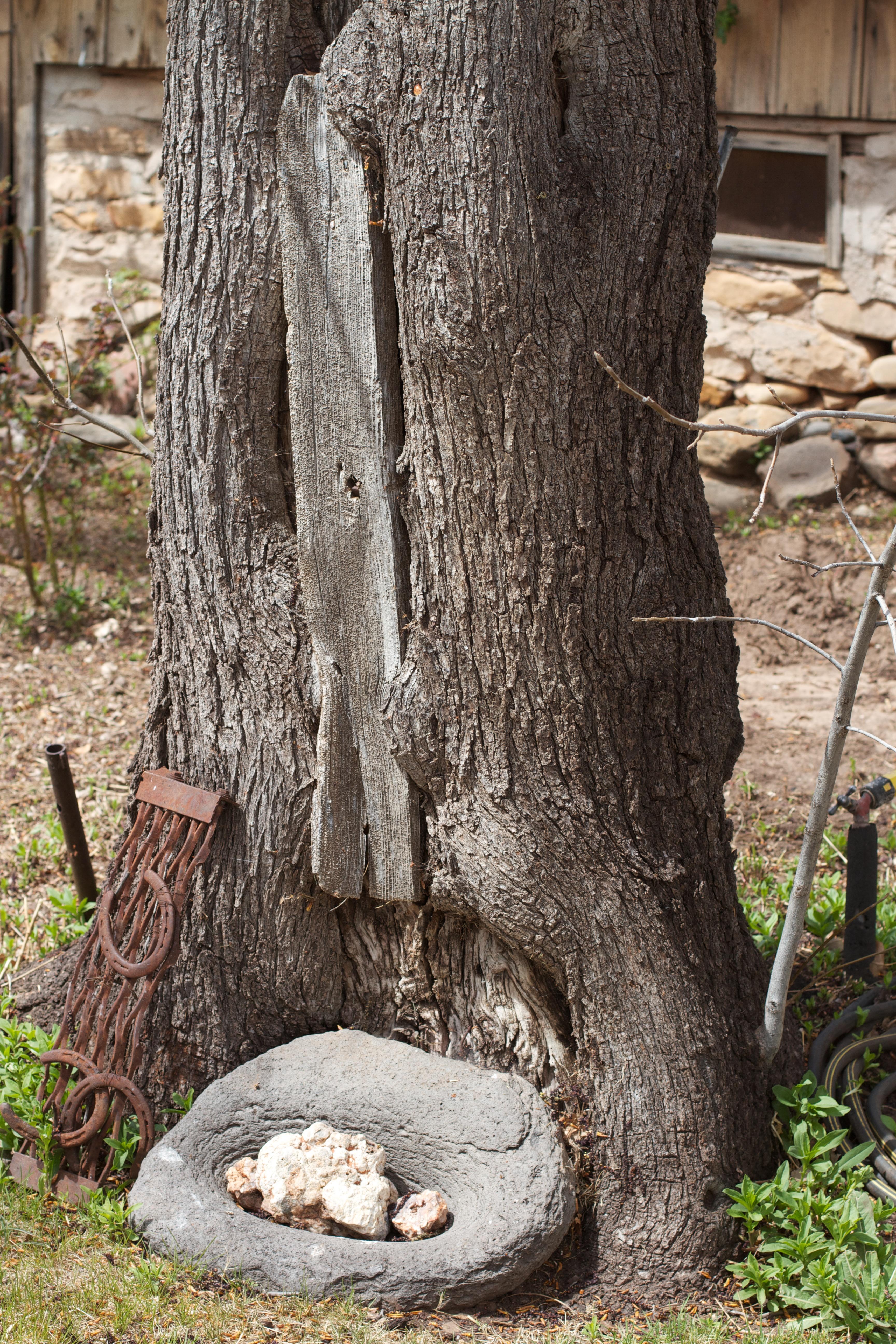 images gratuites arbre roche plante bois tronc sculpture ruines souche d 39 arbre. Black Bedroom Furniture Sets. Home Design Ideas