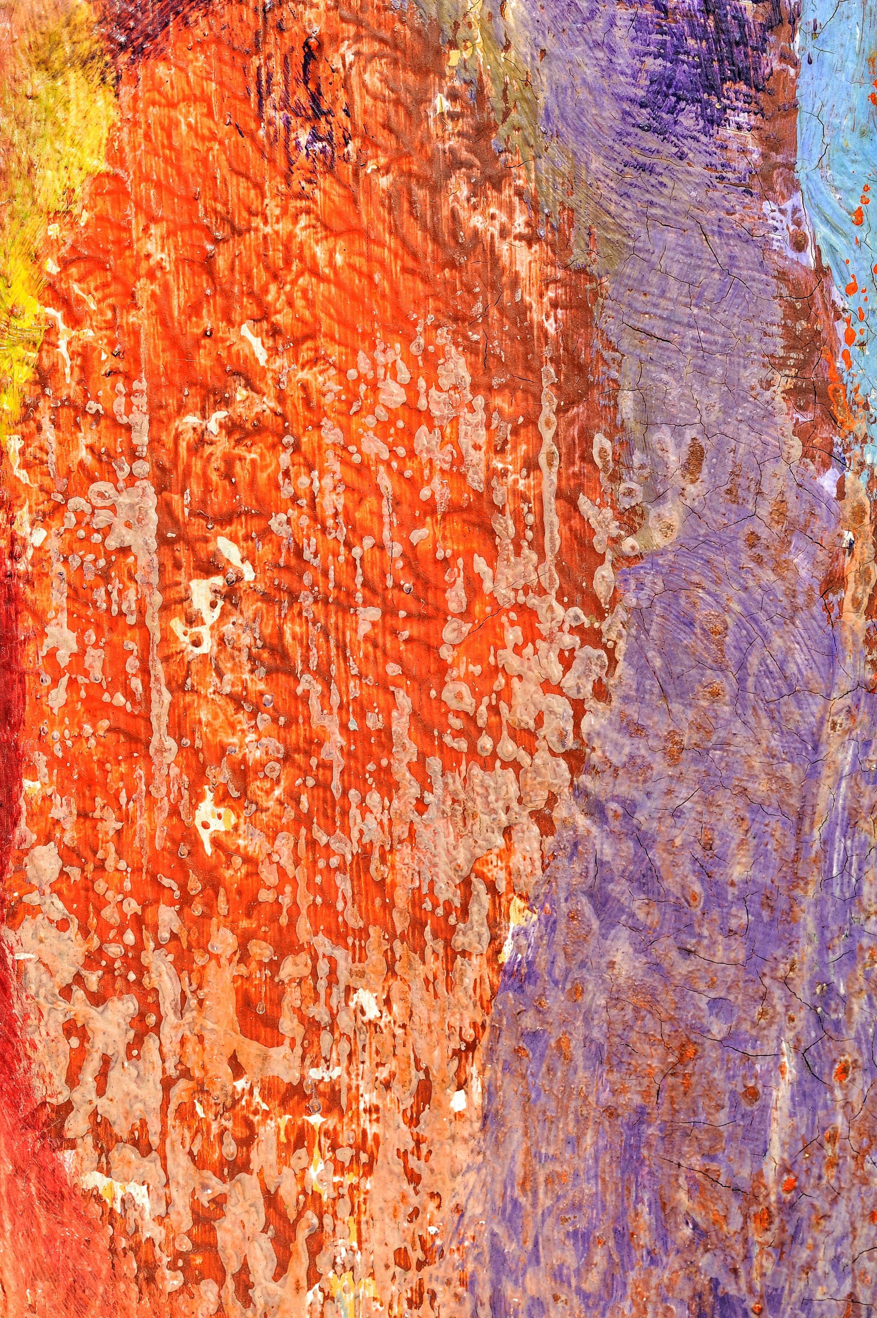 Images Gratuites Arbre Roche Texture Feuille Mur Formation