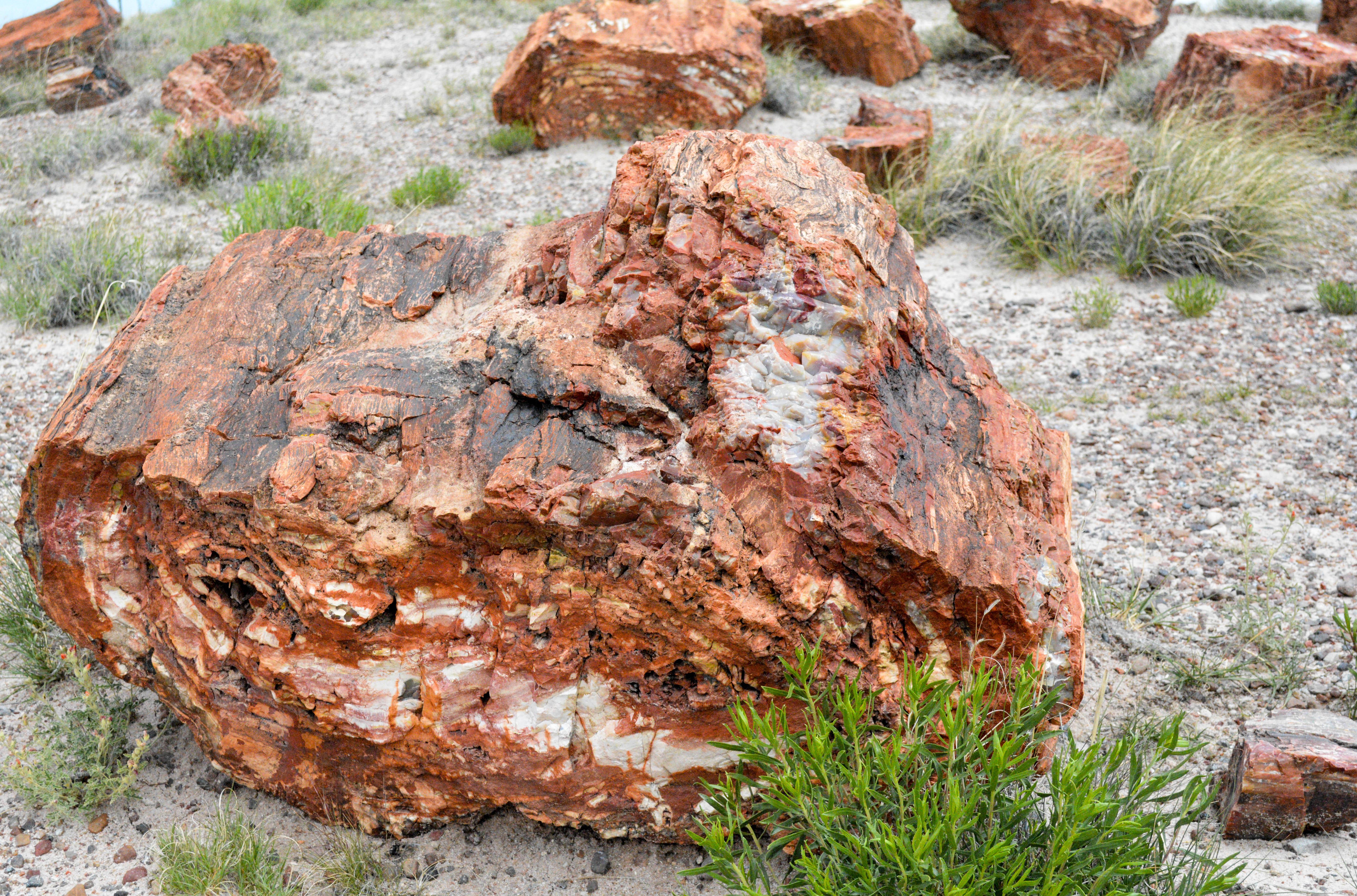каменное дерево фото исполнительницы звучат радио