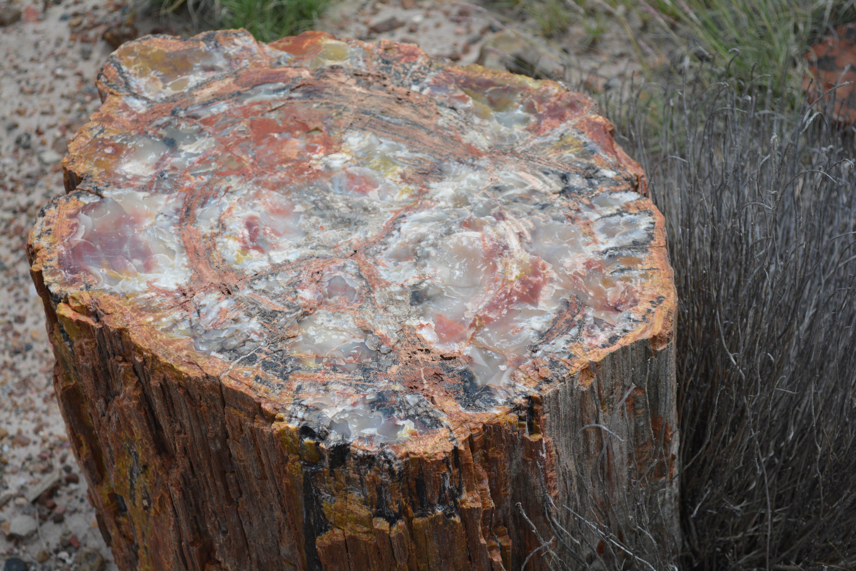 каменное дерево фото контуры