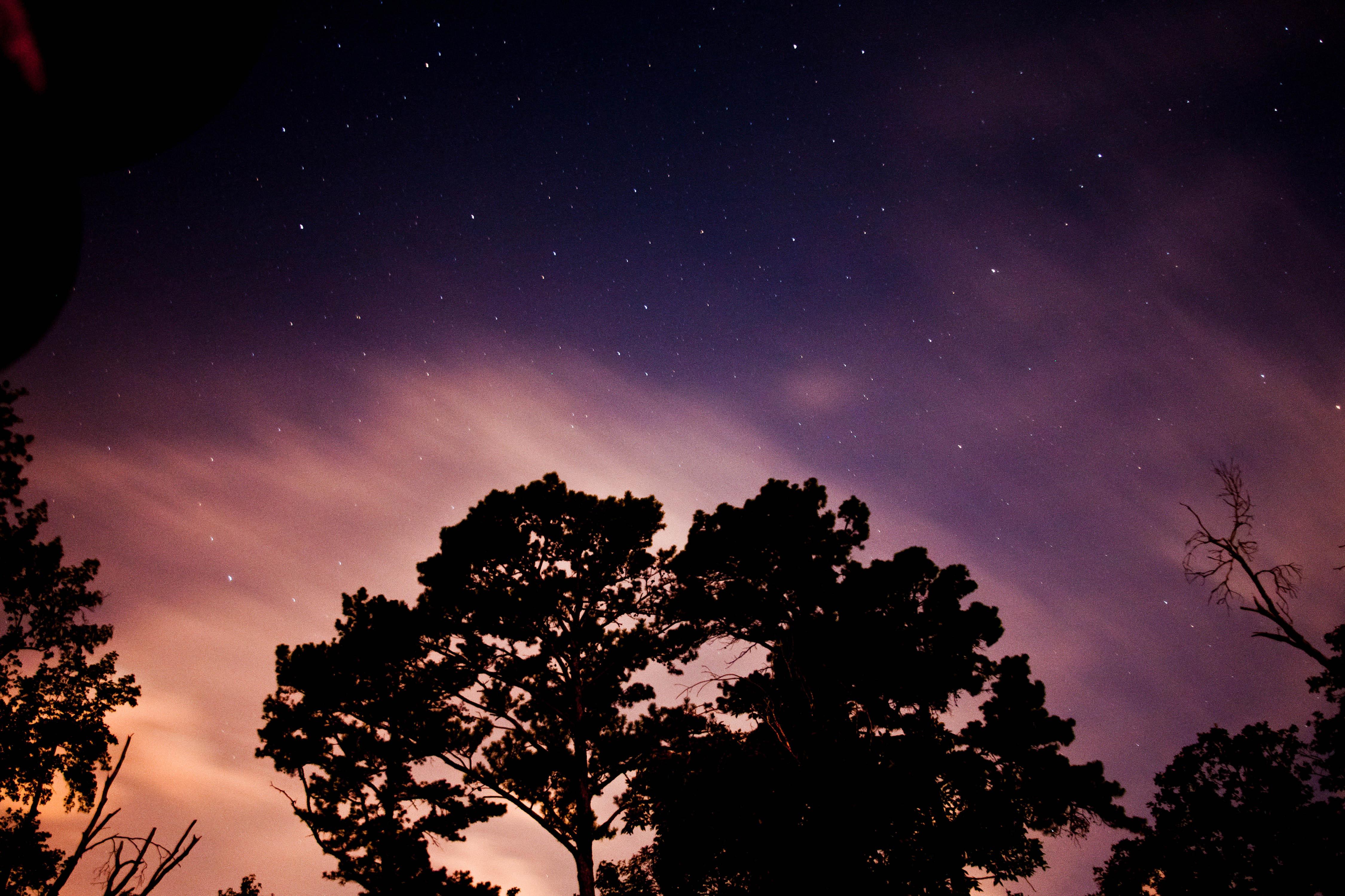 картинки ночное небо и деревья все времена