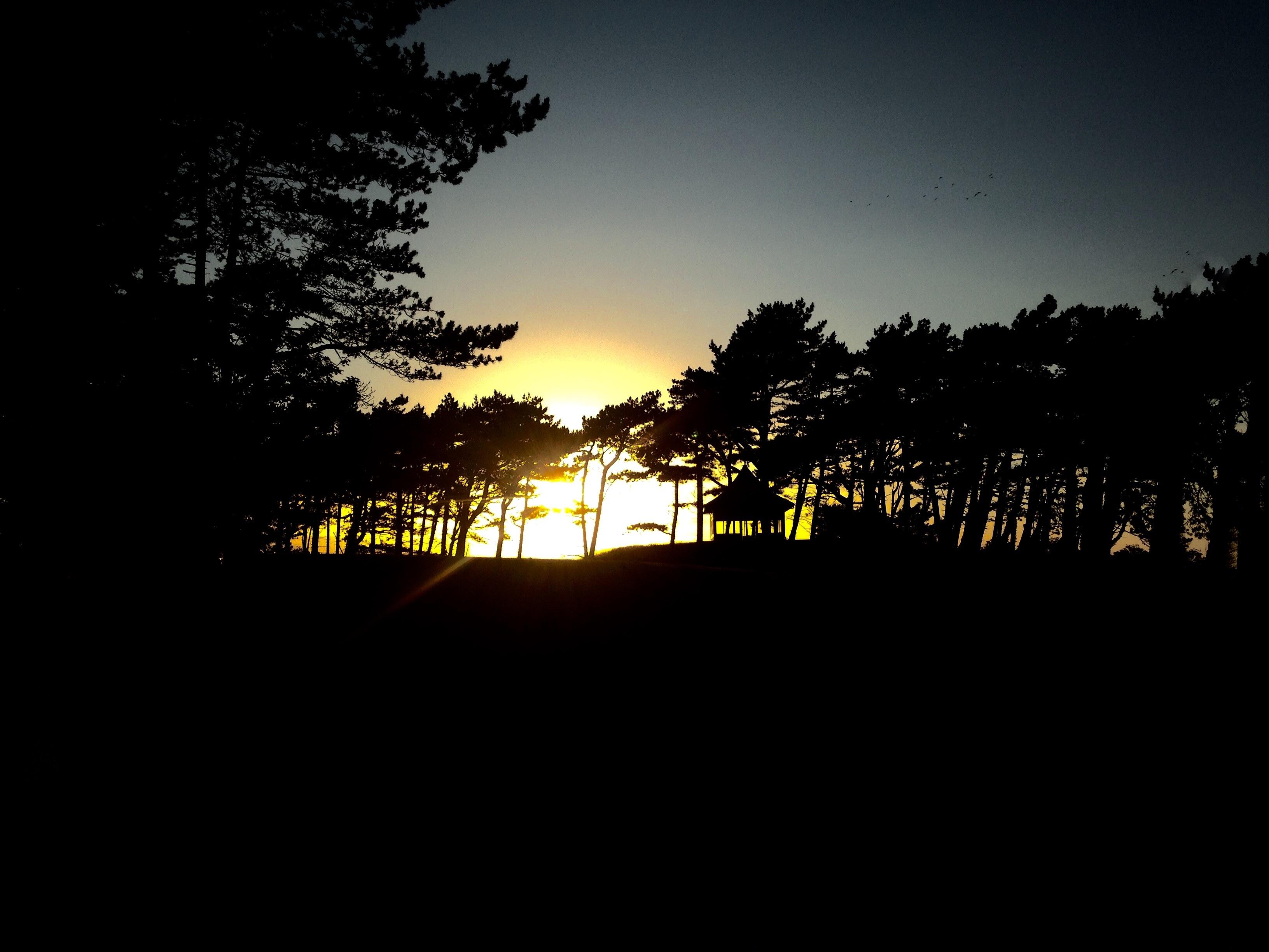Gratis Afbeeldingen : boom, silhouet, licht, wolk, hemel, zon ...