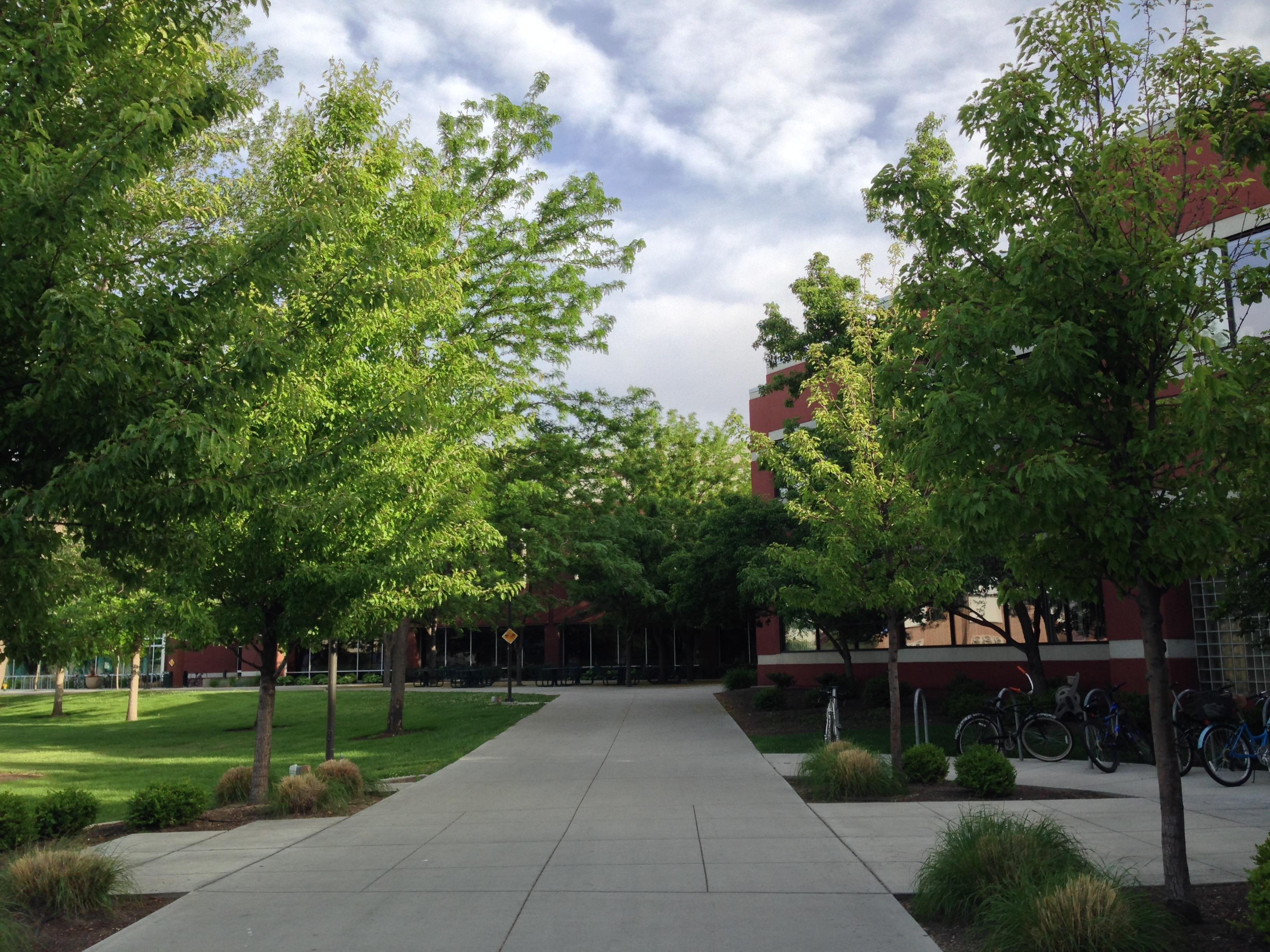 arbre ciel pelouse ville centre ville banlieue place parc jardin espace public des arbres universit place - Arbre Ciel