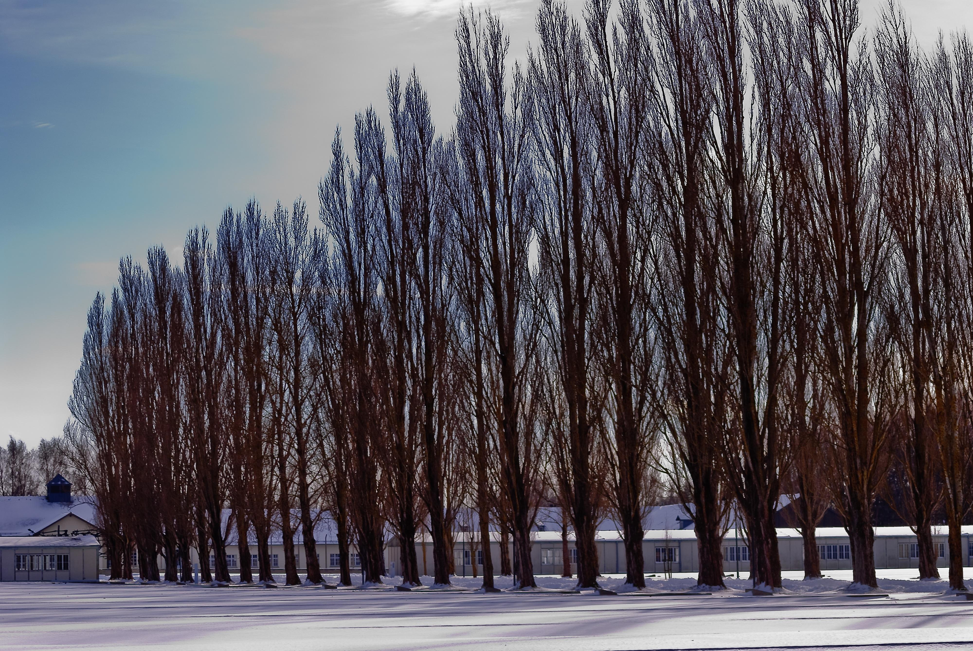 Kostenlose foto : Baum, Schnee, kalt, Winter, Stacheldraht, Himmel ...