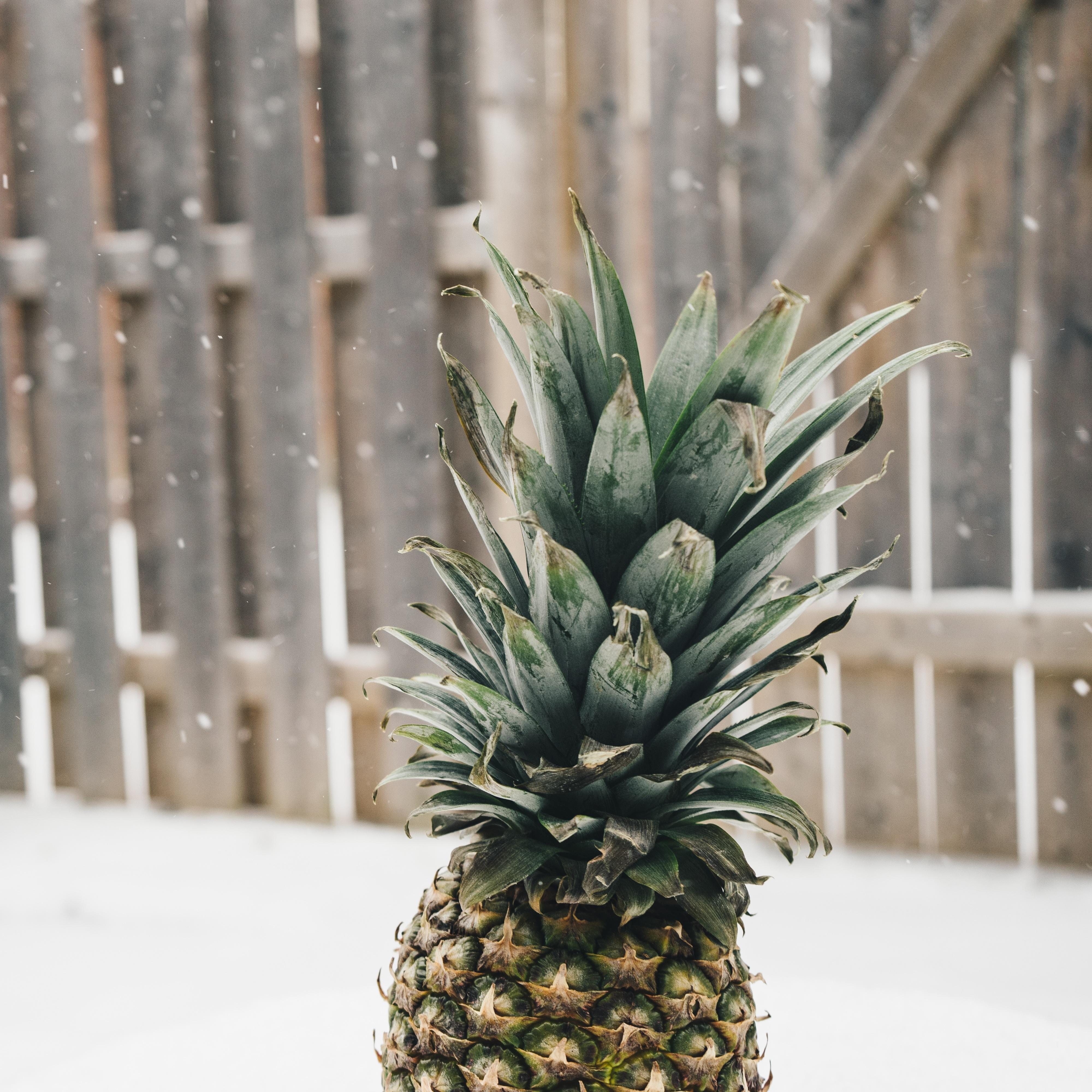 images gratuites arbre du froid hiver fruit aliments produire tropical botanique en. Black Bedroom Furniture Sets. Home Design Ideas