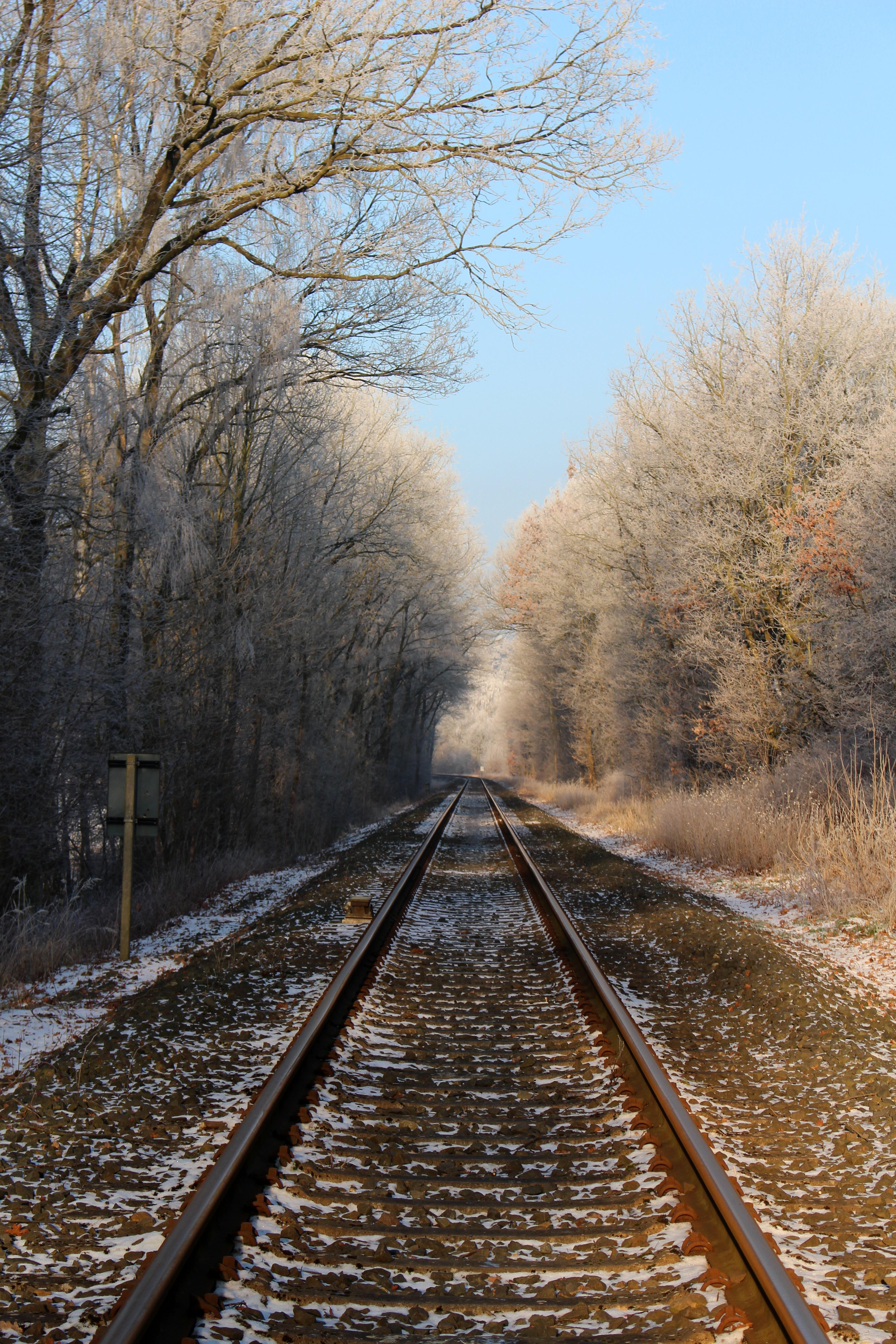 Free Images Tree Snow Cold Winter Track Bridge