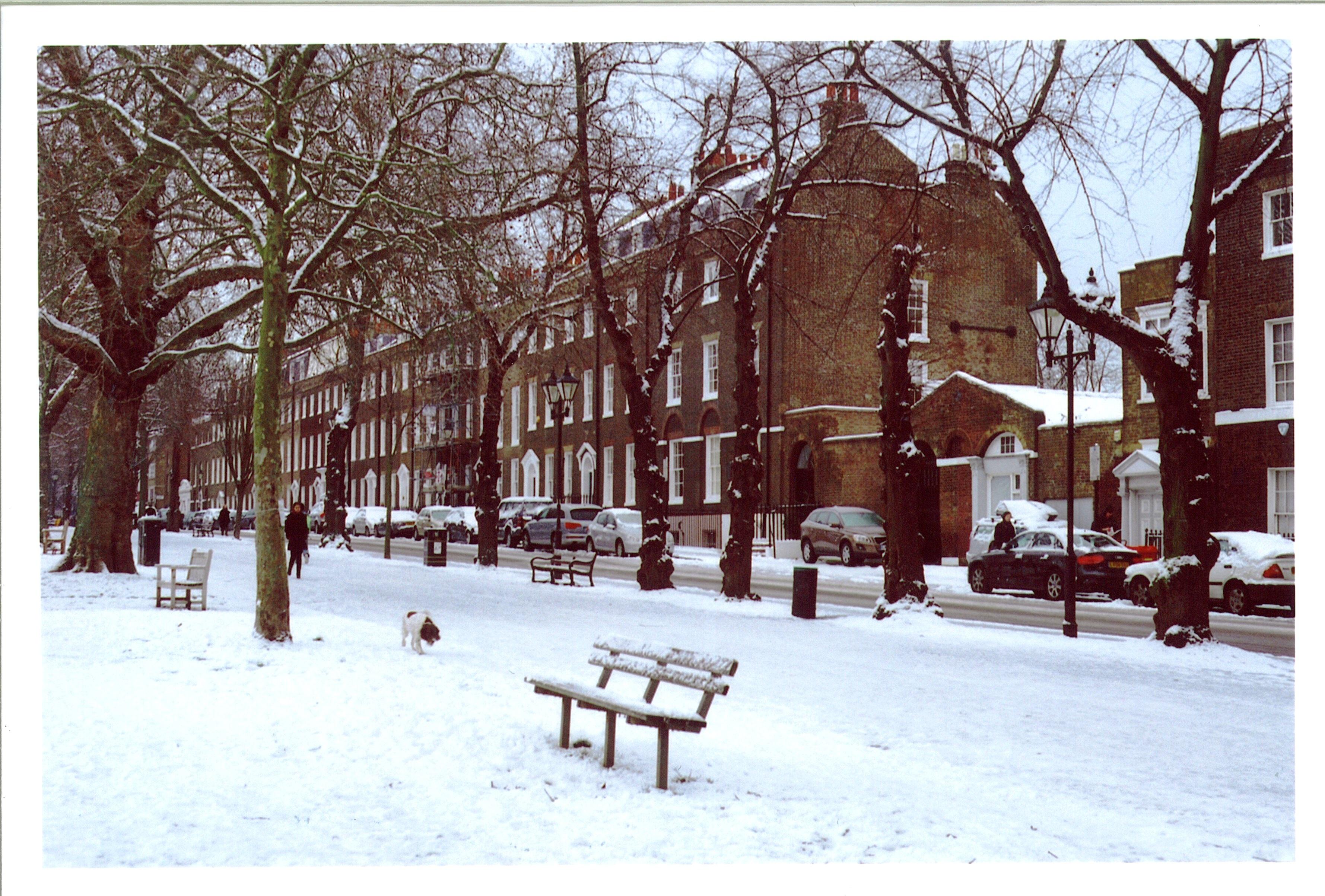 Gambar Pohon Musim Dingin Putih Pemandangan Kota Cuaca Beku