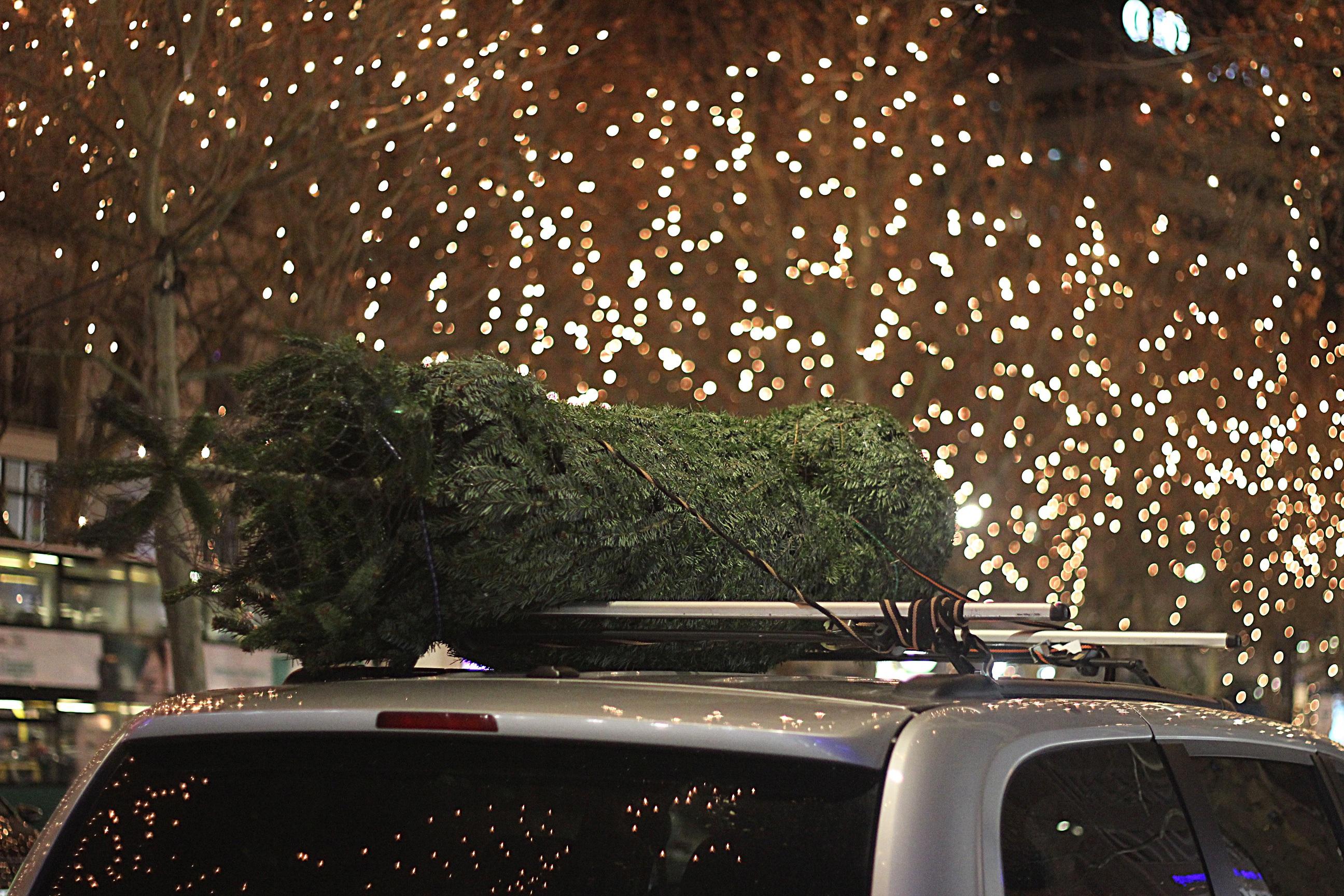 immagini belle : la neve, leggero, strada, auto, notte, bicchiere ... - Illuminazione Alberi Natale