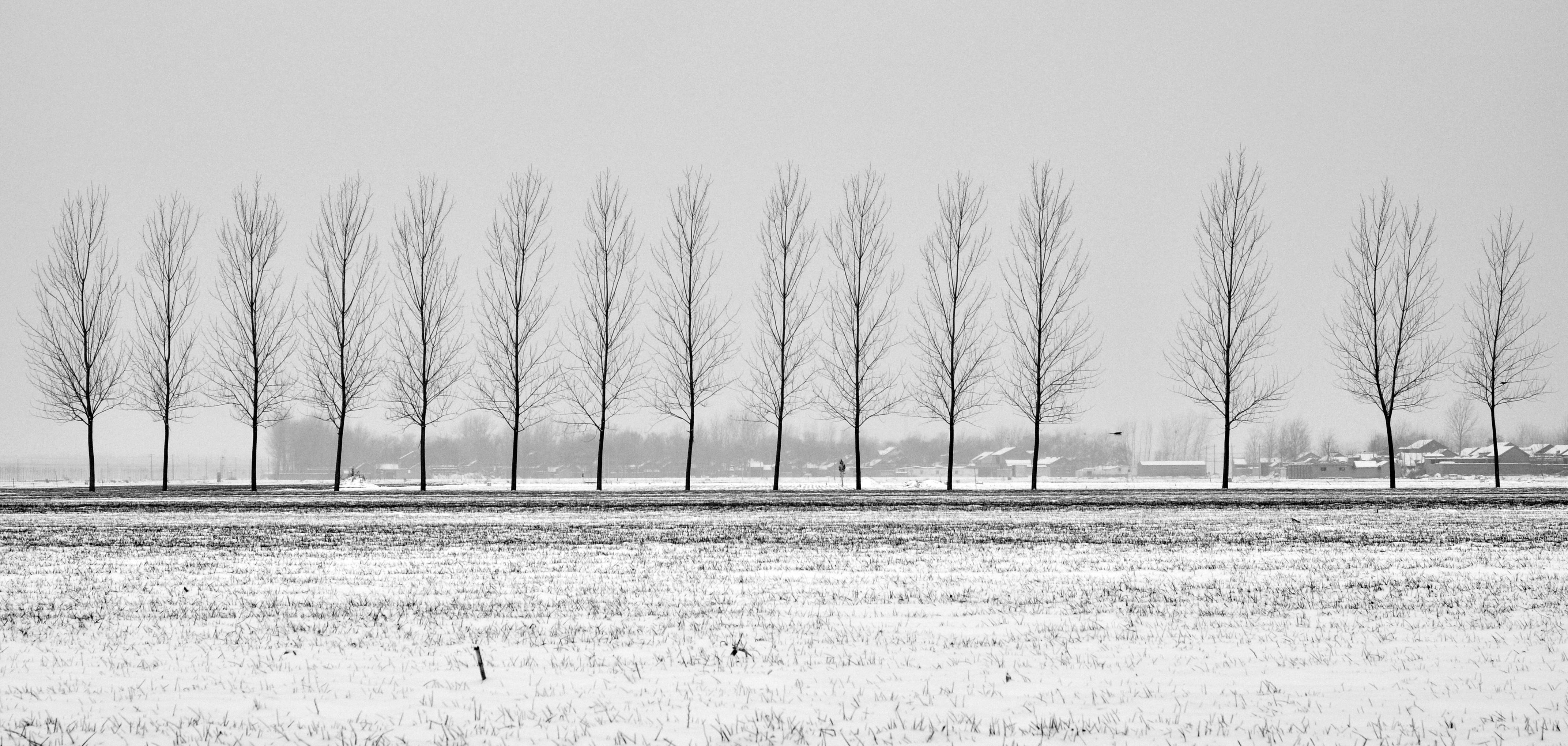 Images Gratuites Arbre Neige Hiver Noir Et Blanc Gel La Glace