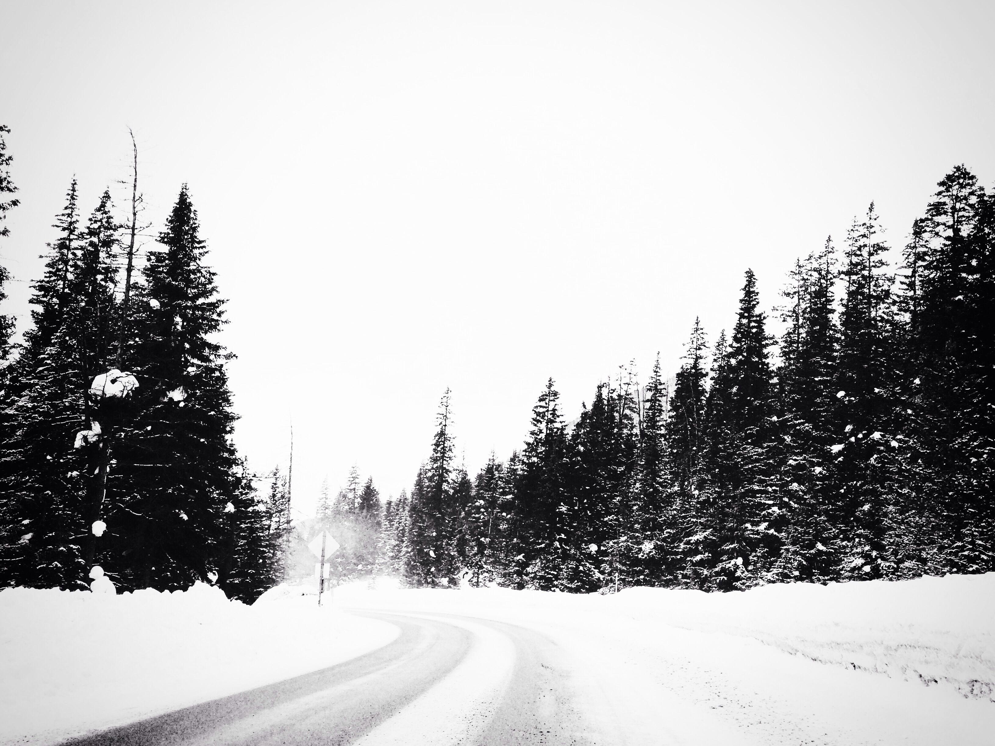 черная зима картинки сейчас хочу поделиться