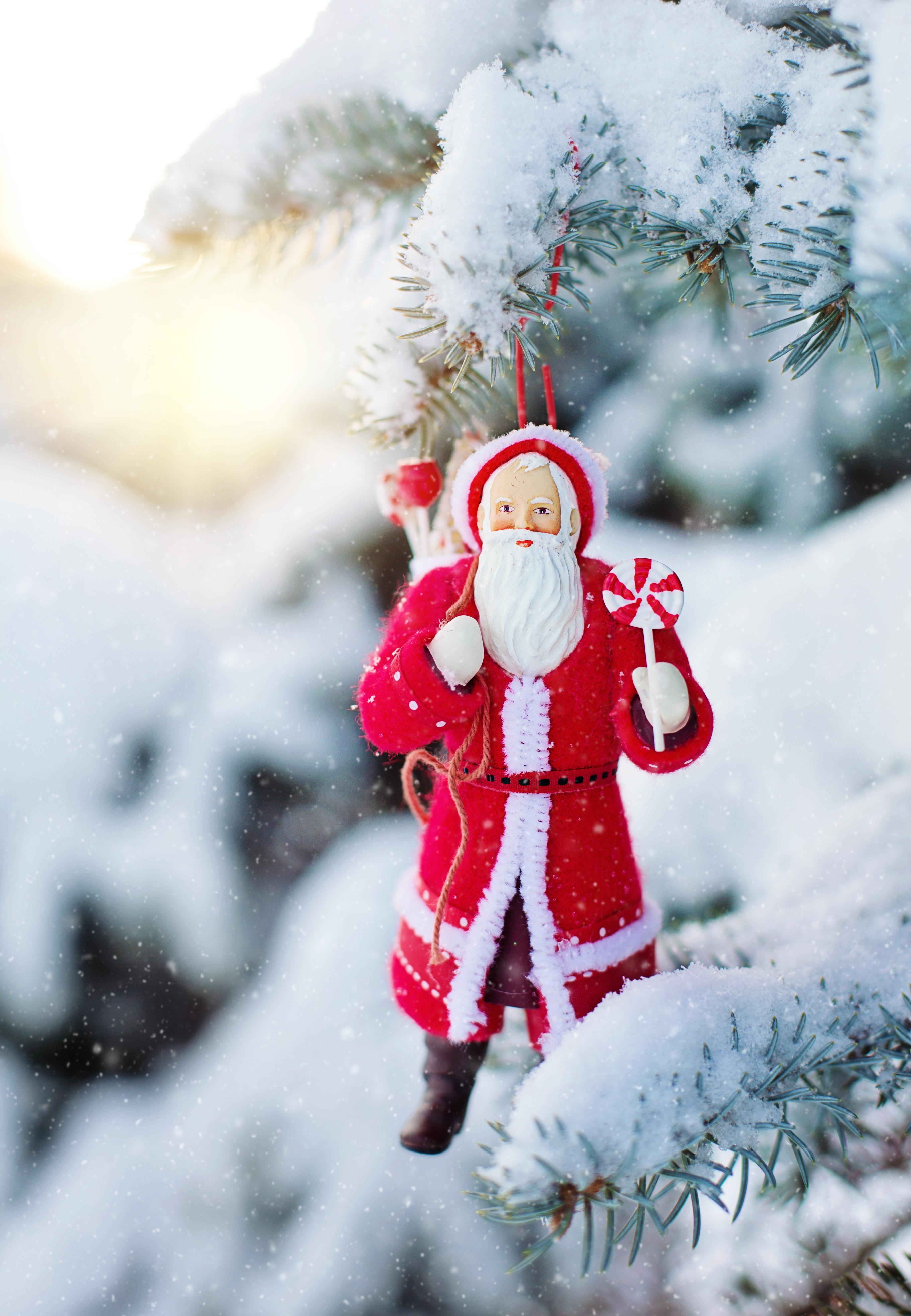 Fotos gratis : invierno, escarcha, pino, fiesta, árbol de Navidad ...