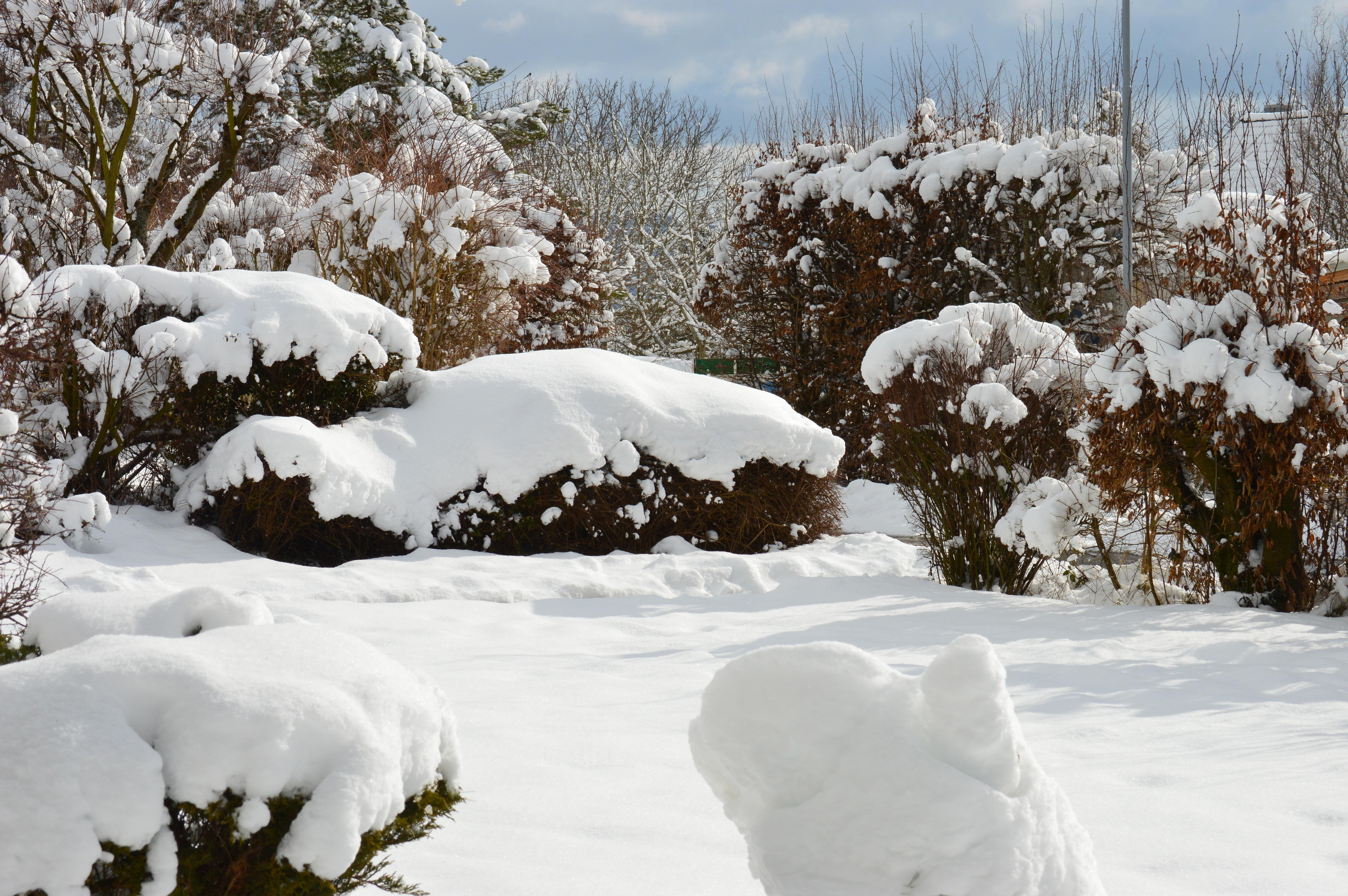 картинка деревья и кусты зимой